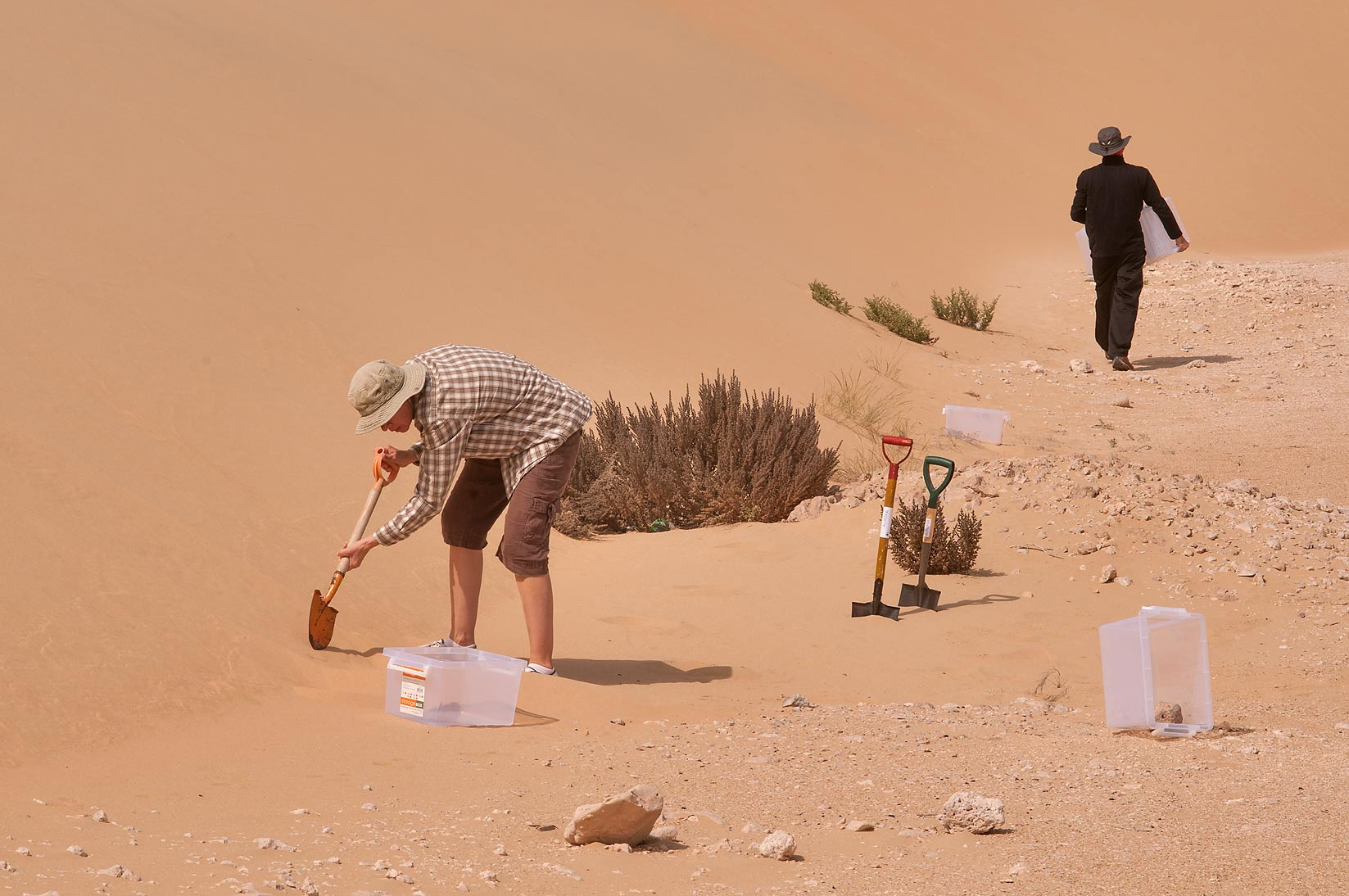 Placing a pitfall trap (trapping pit) at the foot...Mesayeed, south-west from Doha. Qatar
