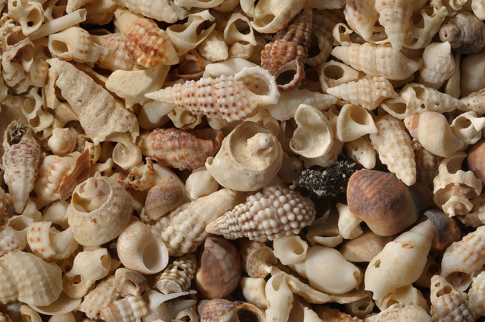 Accumulation of sea shells in Al Aaliya Island (Jazirat al Aliyah). Qatar