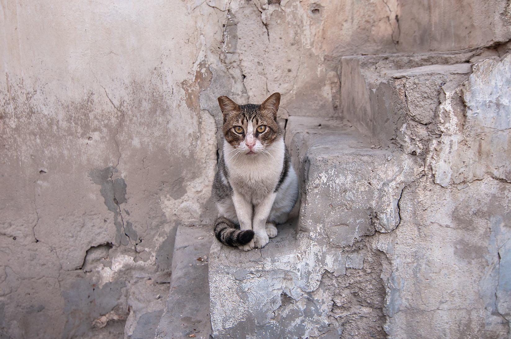Cat sitting on stone steps at Umm Wishah St., Musheirib area. Doha, Qatar