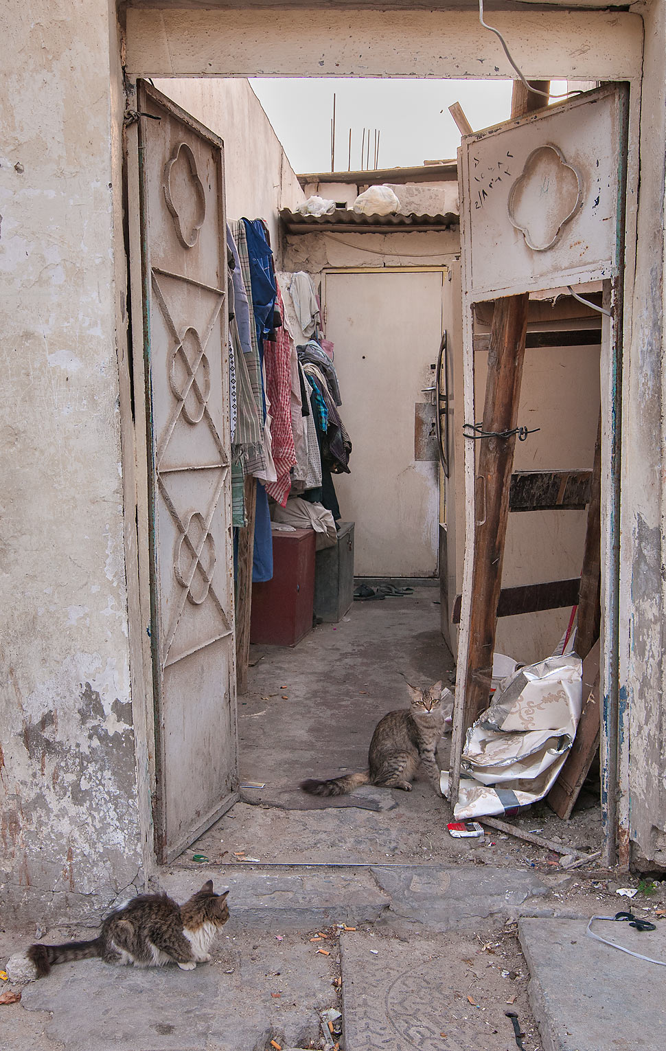 Cats sitting on doorway on Umm Wishah St., Musheirib area. Doha, Qatar