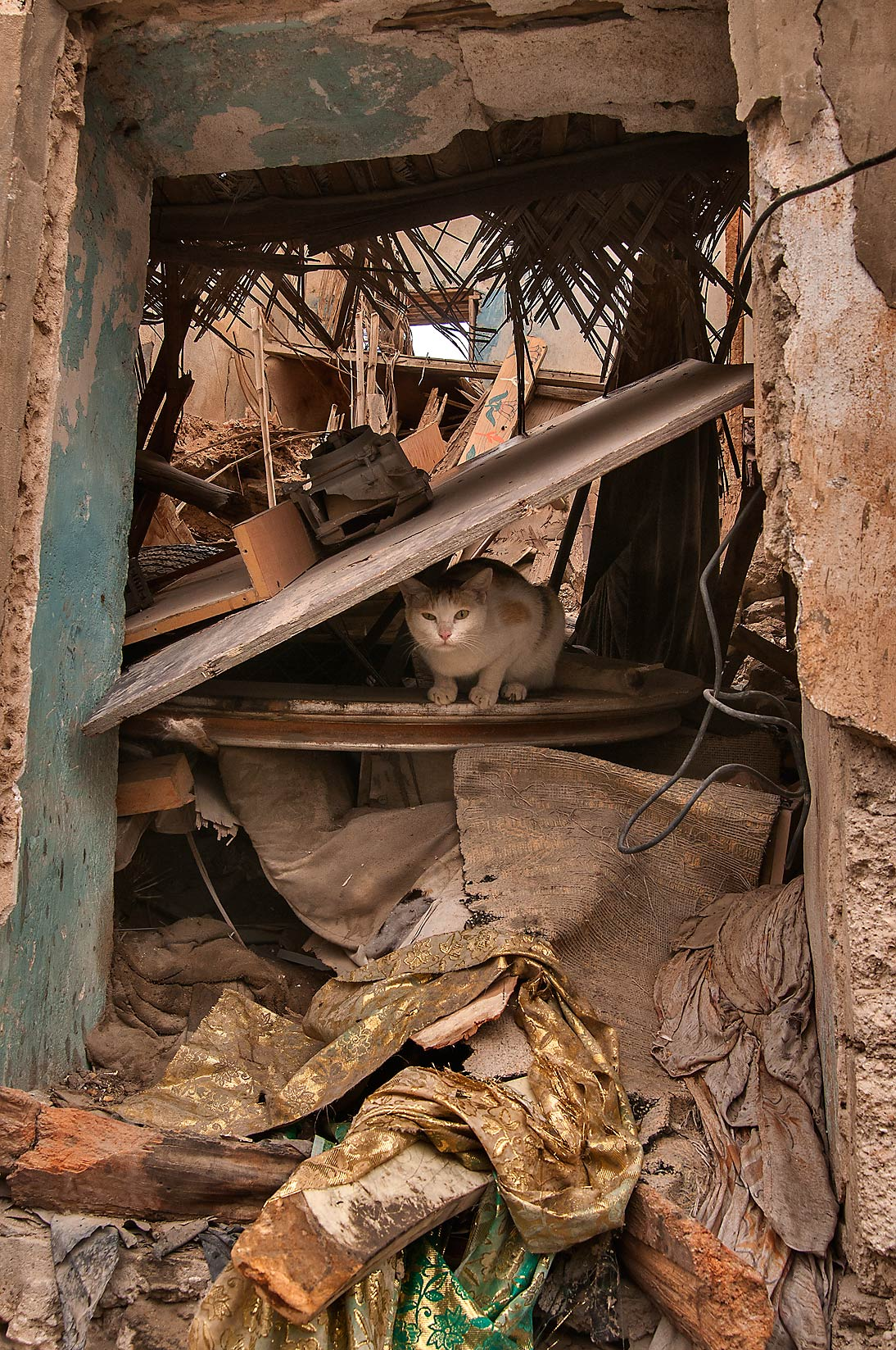 Cat hiding under rubble in doorway on Umm Wishah St., Musheirib area. Doha, Qatar
