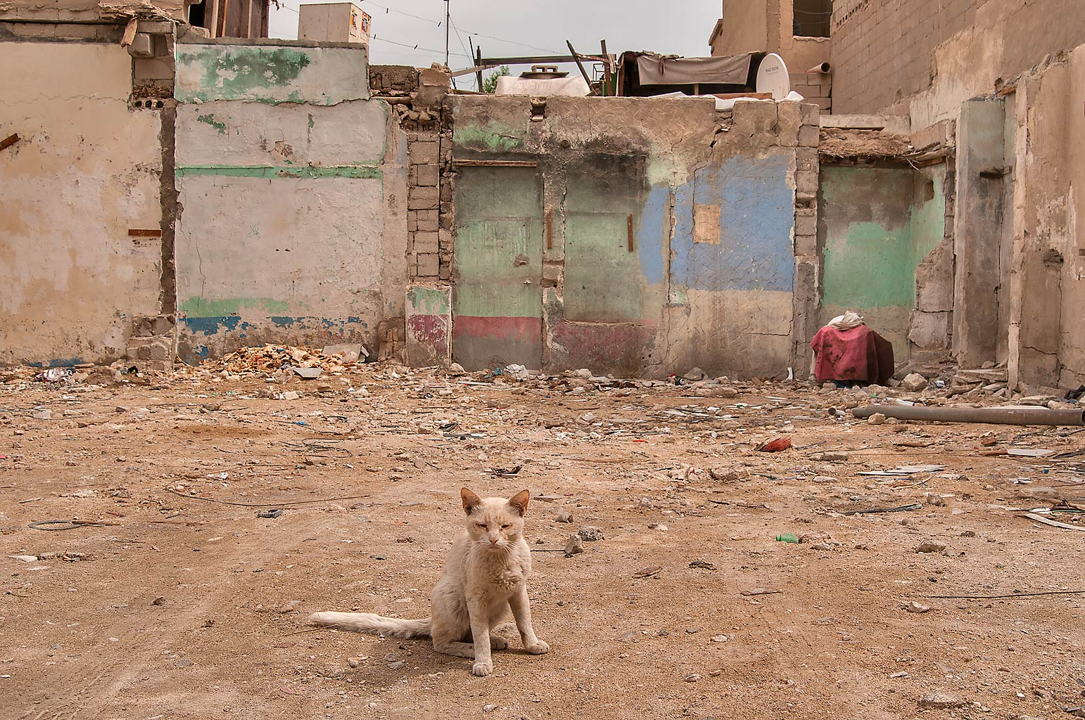 Cat on its hunting range at Ibn Abdul Muttalib St. in Old Al Ghanim area. Doha, Qatar