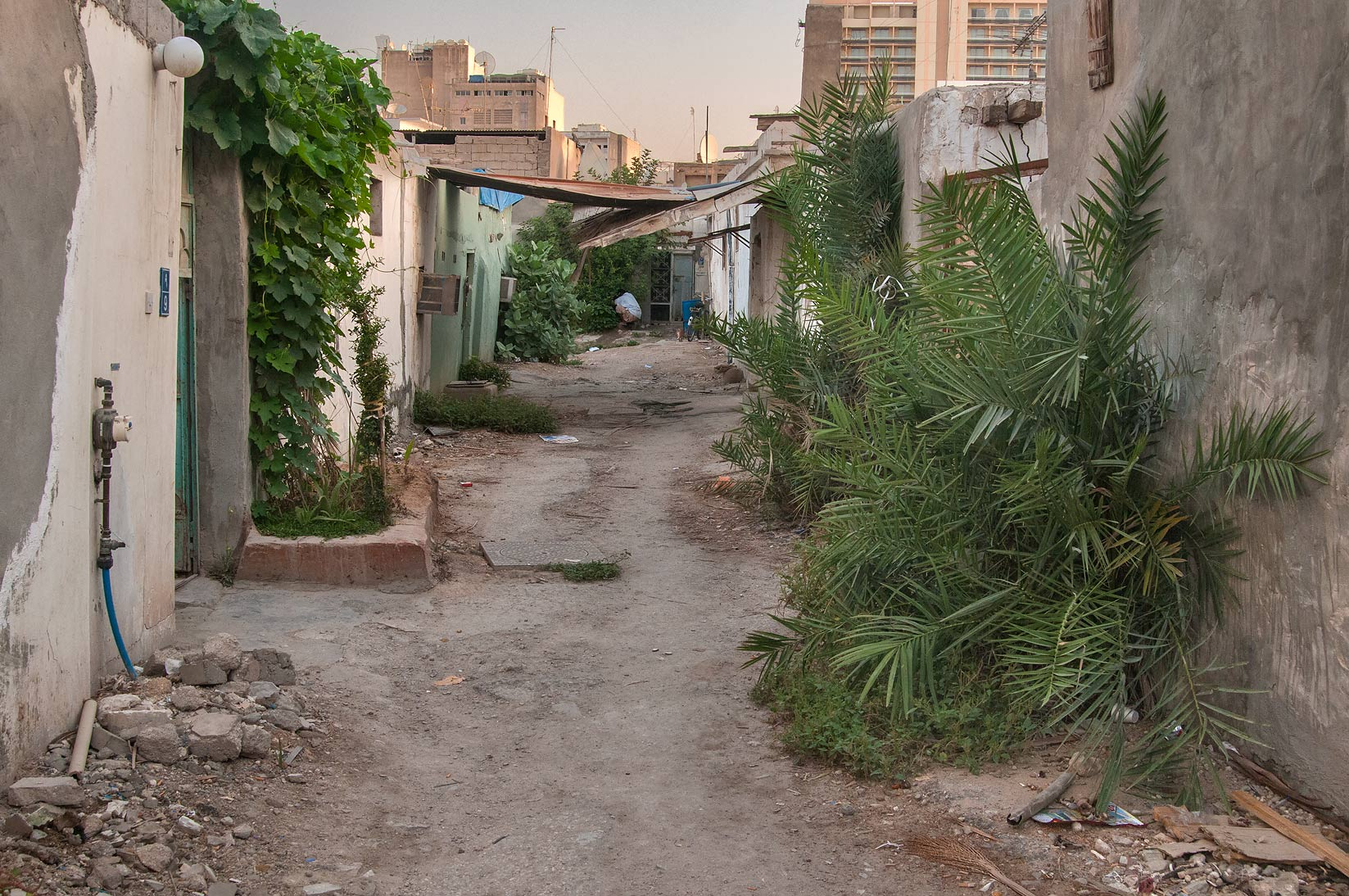 Alley (sikka) with palms trees (Phoenix dactylifera) in Musheirib area. Doha, Qatar