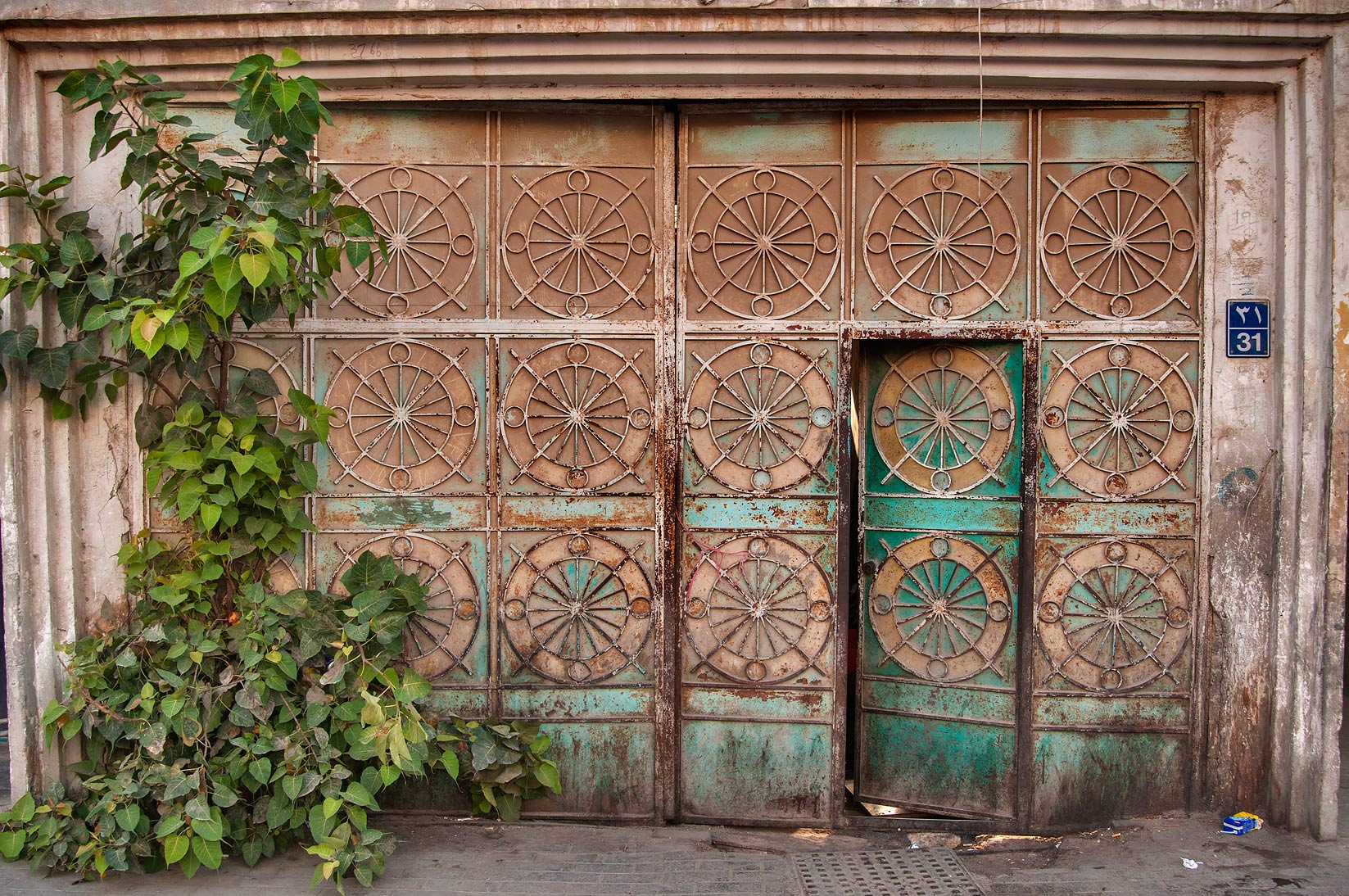 Iron door with sacred fig (Bo-Tree, Ficus...Ahmed St., Musheirib area. Doha, Qatar