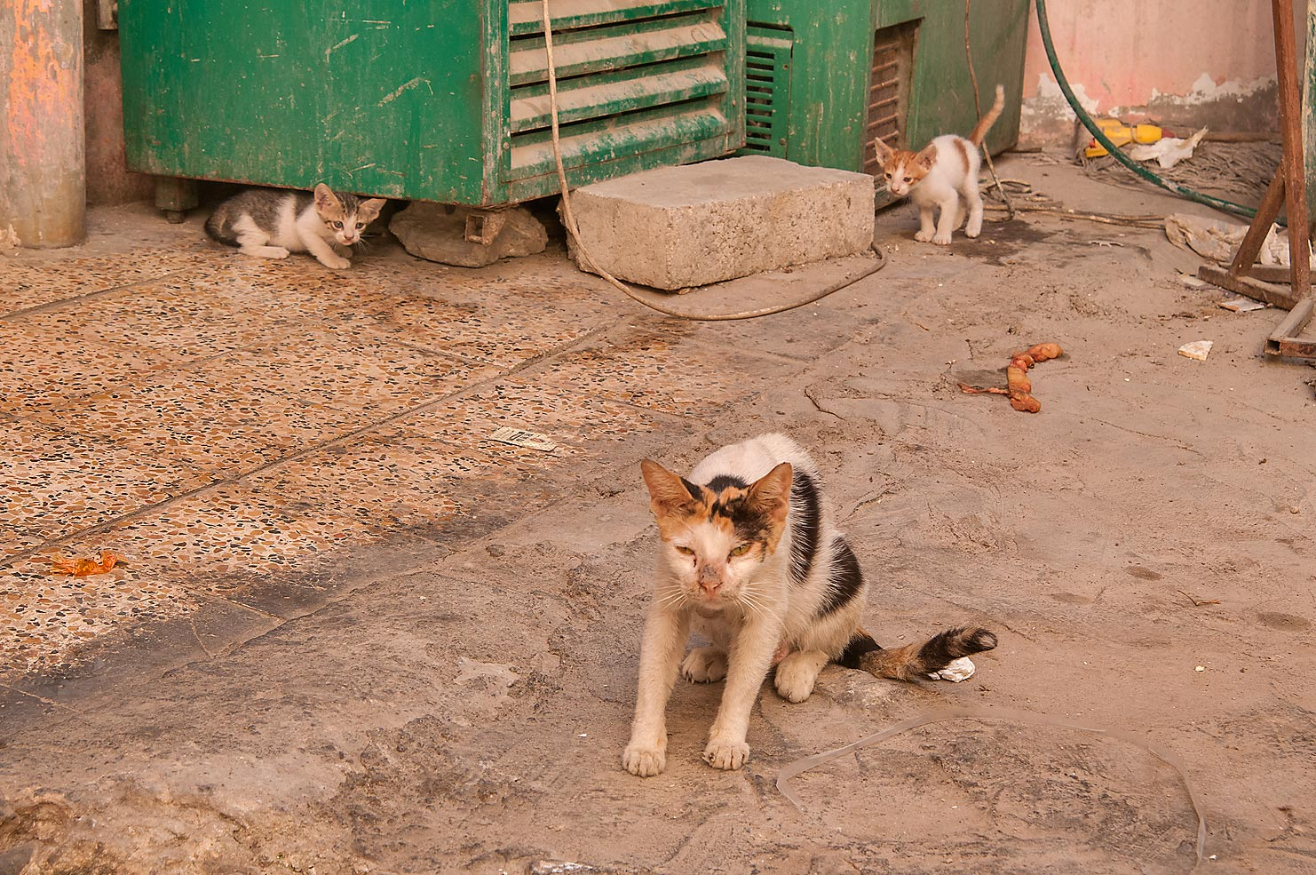Cat guarding its kitten at Al Aqaba St., Fereej Abdel Aziz area. Doha, Qatar