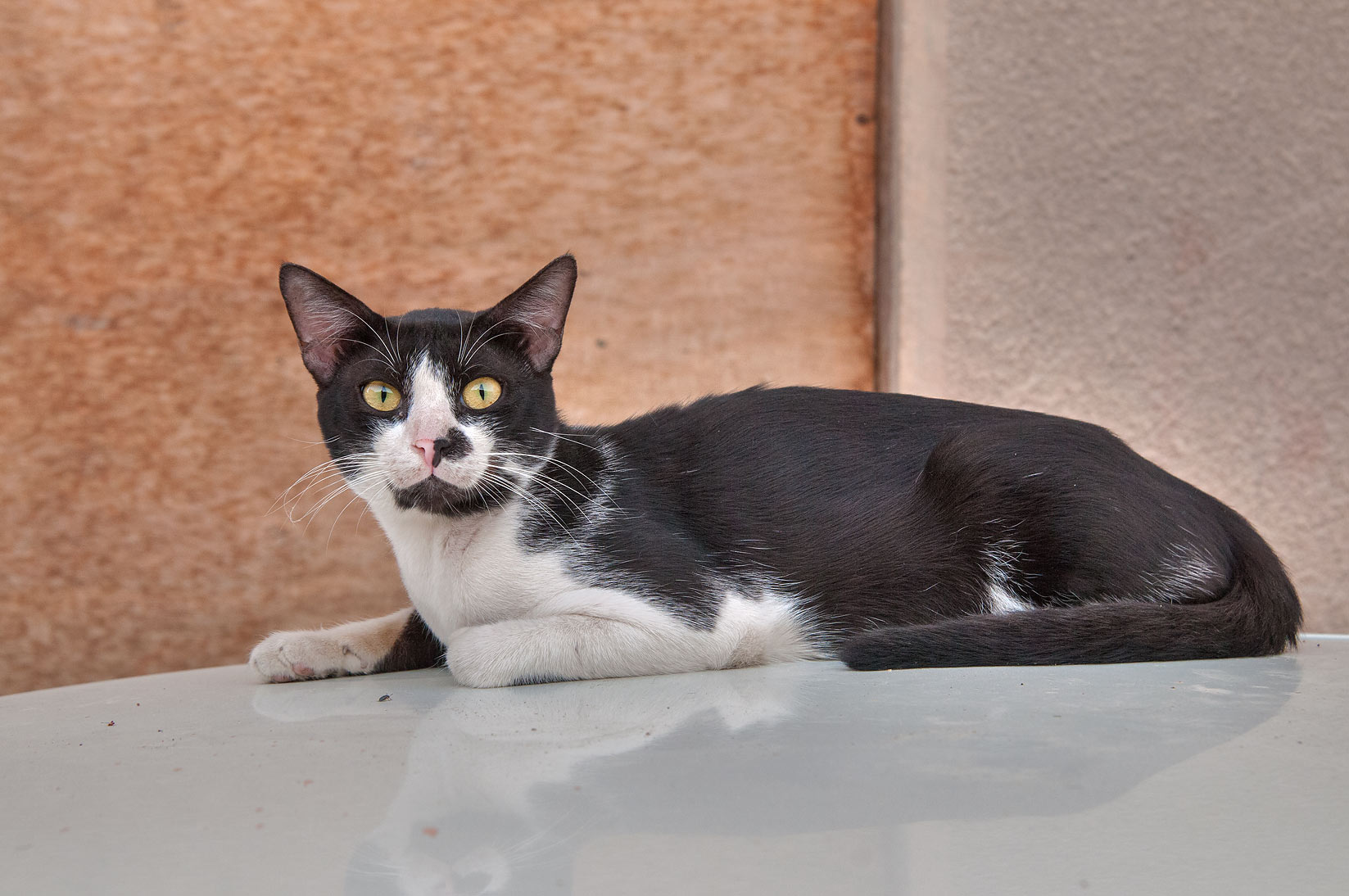 Tuxedo cat resting on a car at Ibn Al Samit near...St., Musheirib area. Doha, Qatar