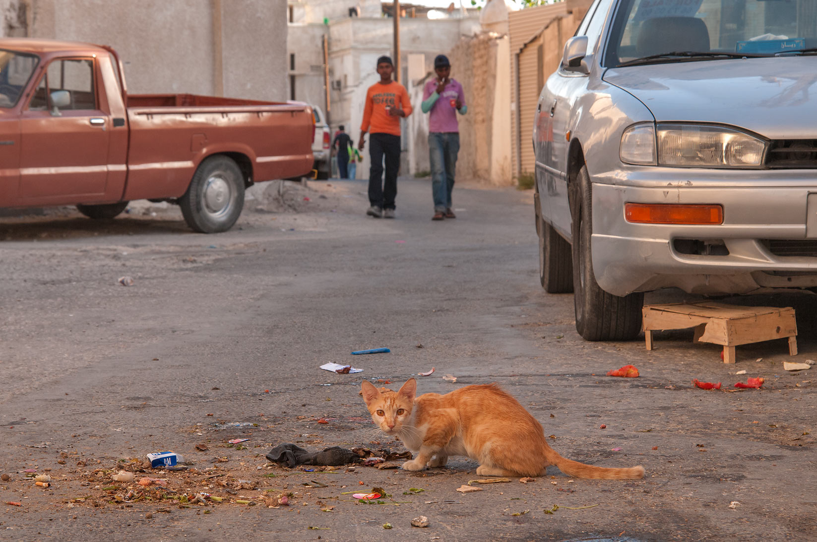 Brown cat at breakfast on Al Jassasiya St., Musheirib area. Doha, Qatar