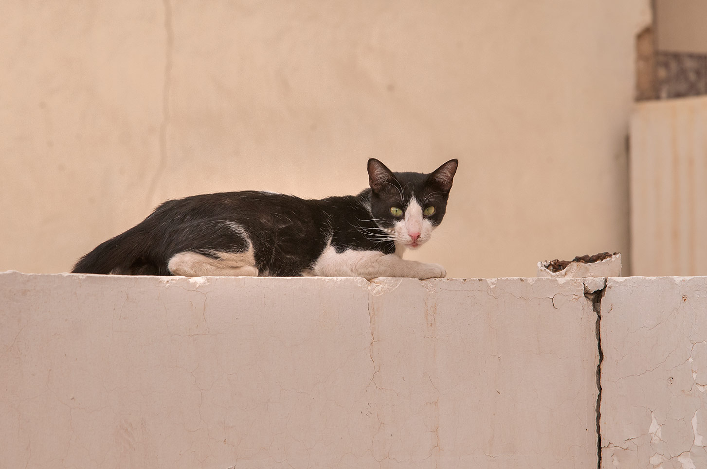 Tuxedo cat sitting on a wall at Ziyad Bin Eyad St., Al Doha Al Jadeeda area. Doha, Qatar