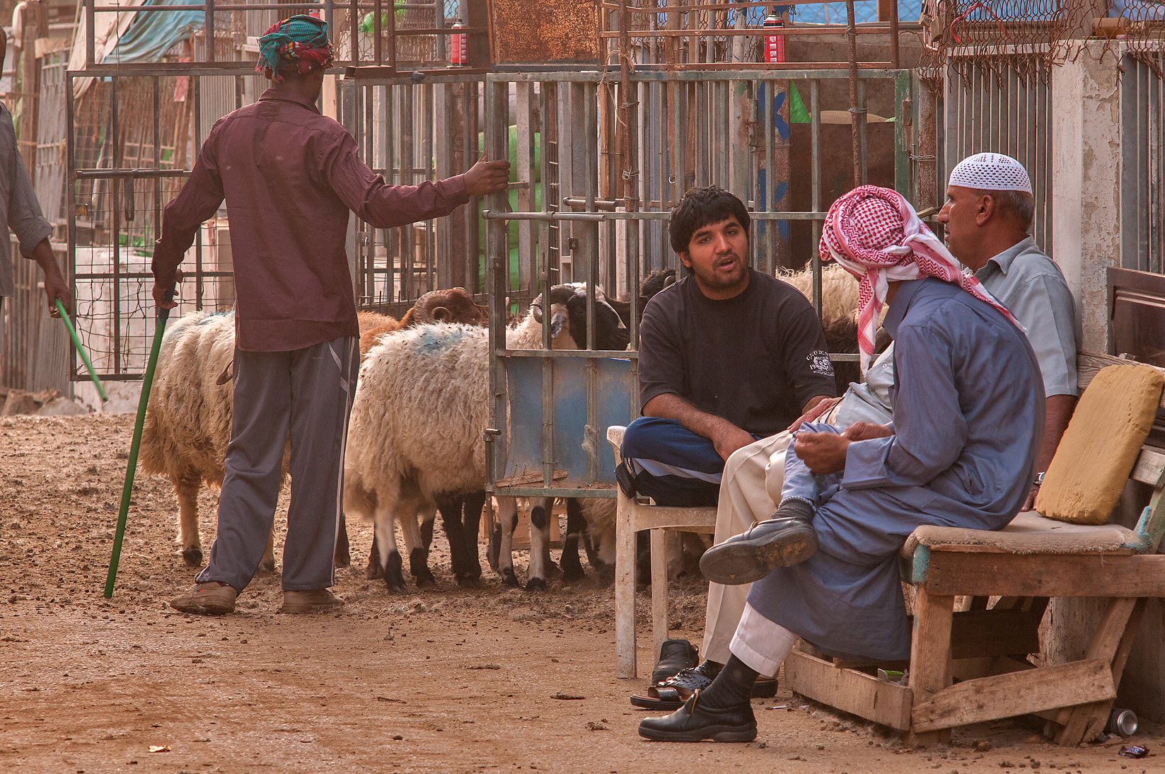 Moving herd of sheep in Livestock Market, Abu Hamour area. Doha, Qatar