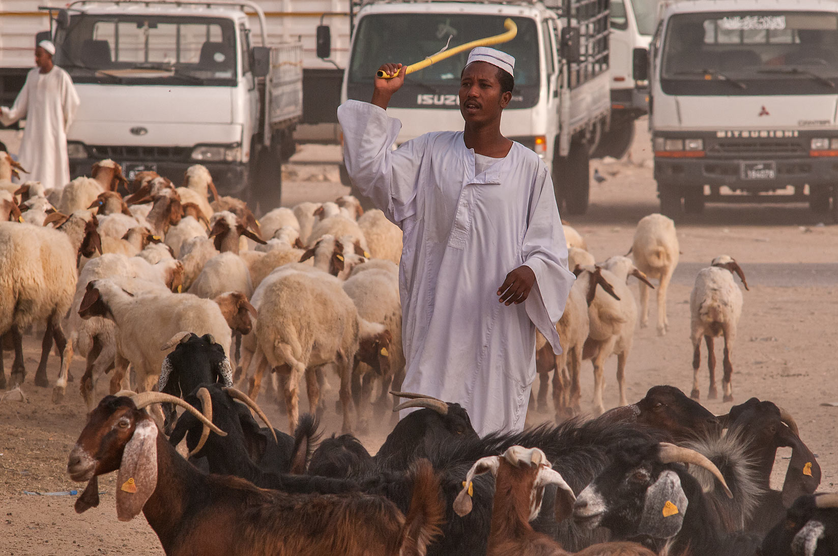 Directing animal traffic in Livestock Market, Abu Hamour area. Doha, Qatar