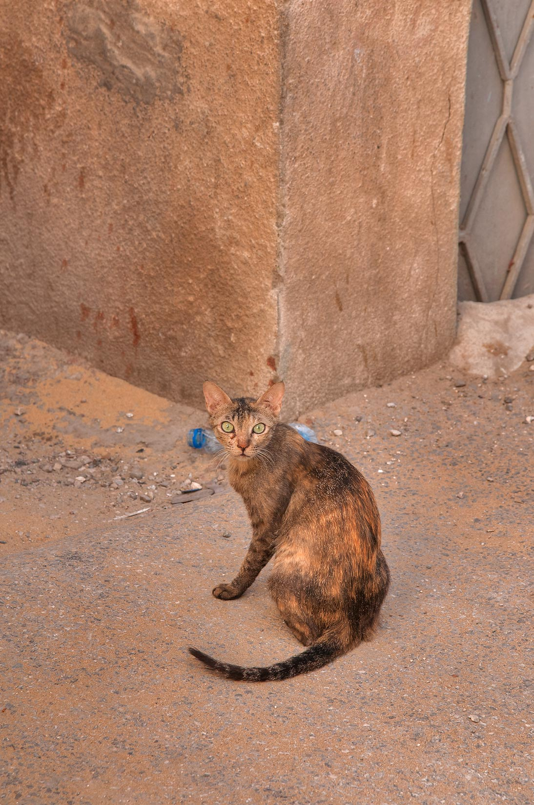Tortoiseshell cat at a corner of Sikkat Al Salf and Al Bunduqiya, Najma area. Doha, Qatar