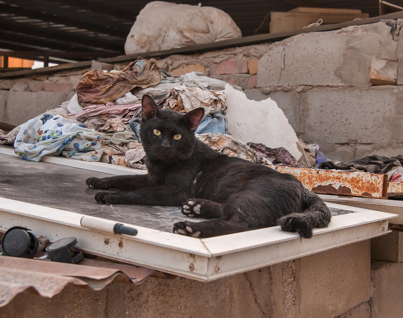 Black cat resting on a roof at Sikkat Al Salf, Najma area. Doha, Qatar
