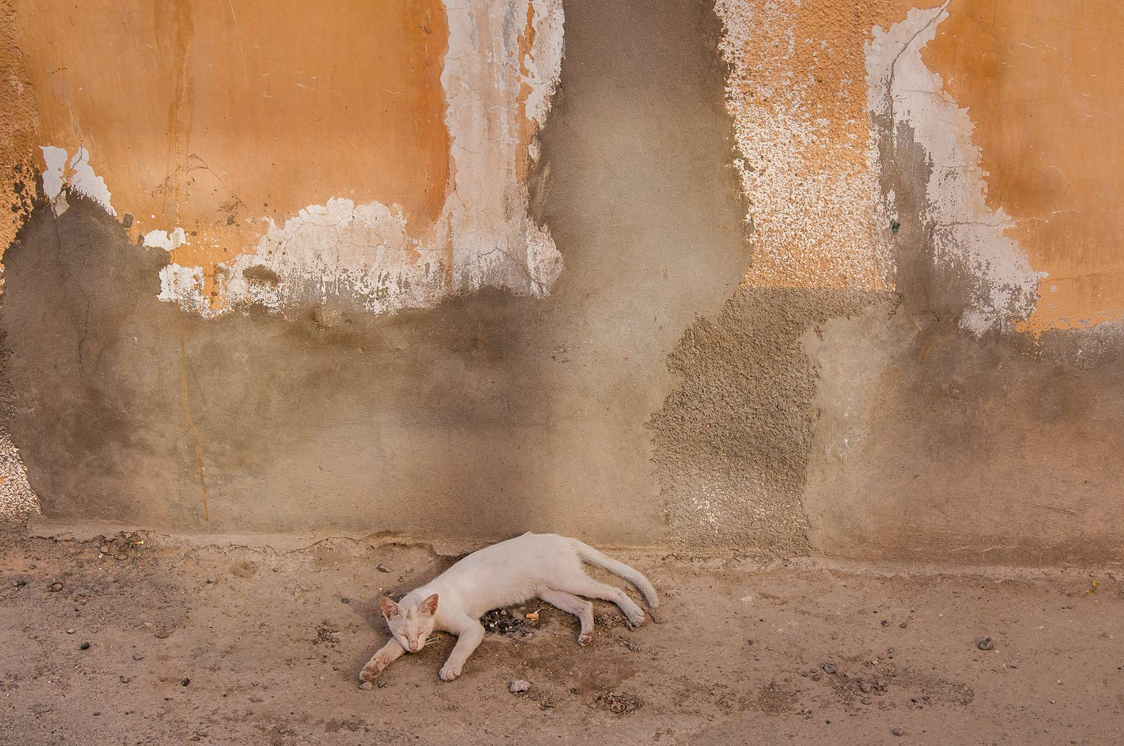 White cat sleeping in sikka (alley) at Sikkat Ibn...Dawakhil St., Najma area. Doha, Qatar
