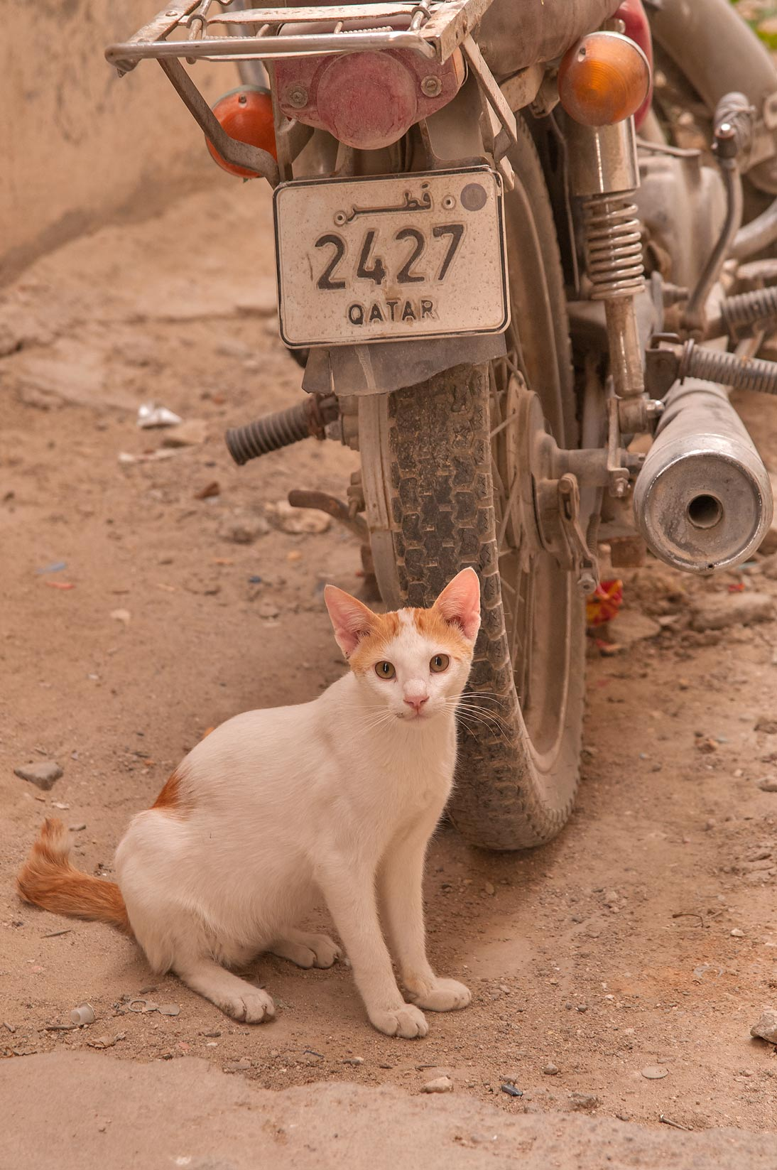 Biker's cat in sikka parallel to Abdullah Bin Thani St., Musheirib area. Doha, Qatar