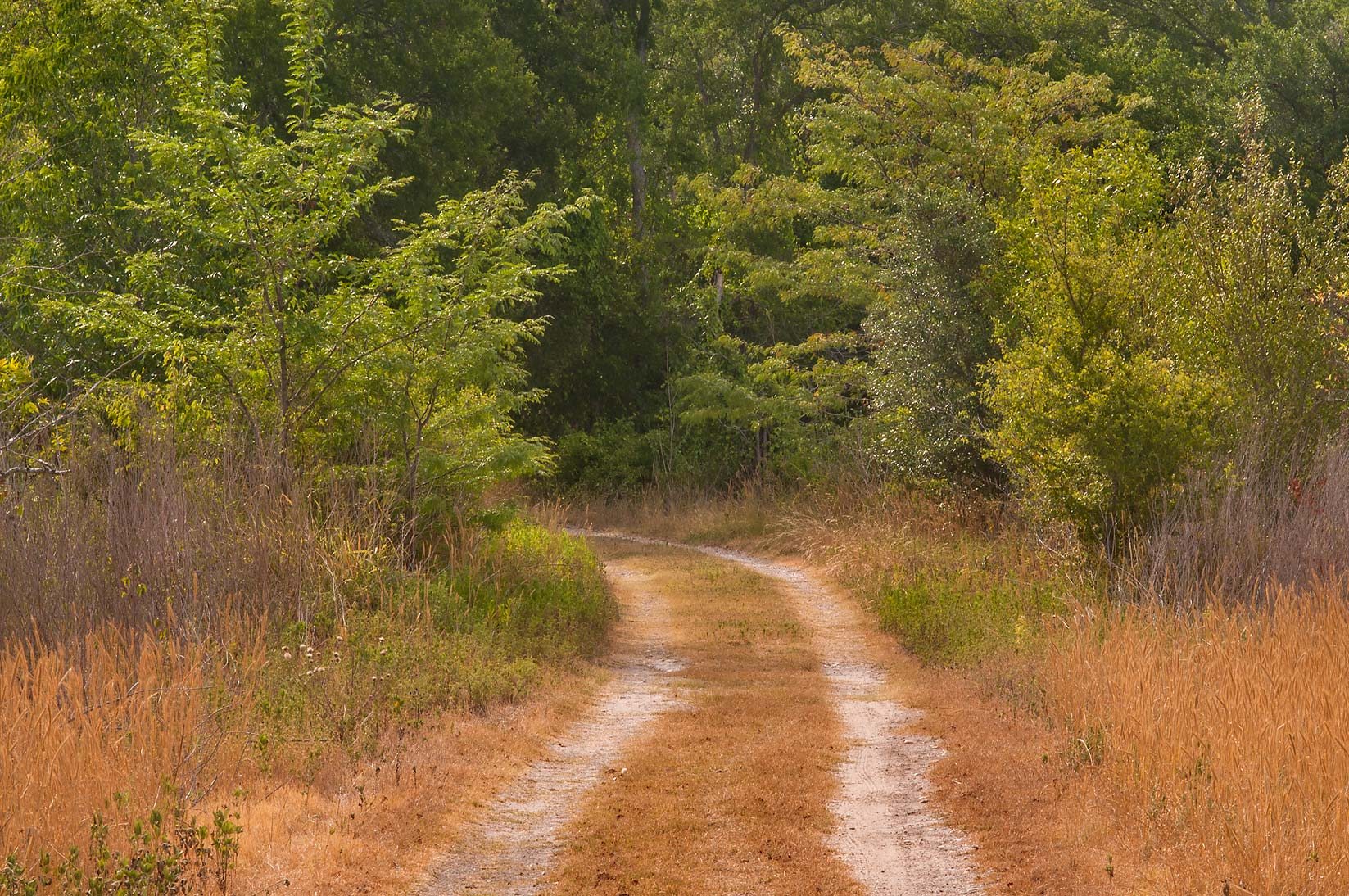A trail in Birch Creek Unit of Somerville Lake State Park