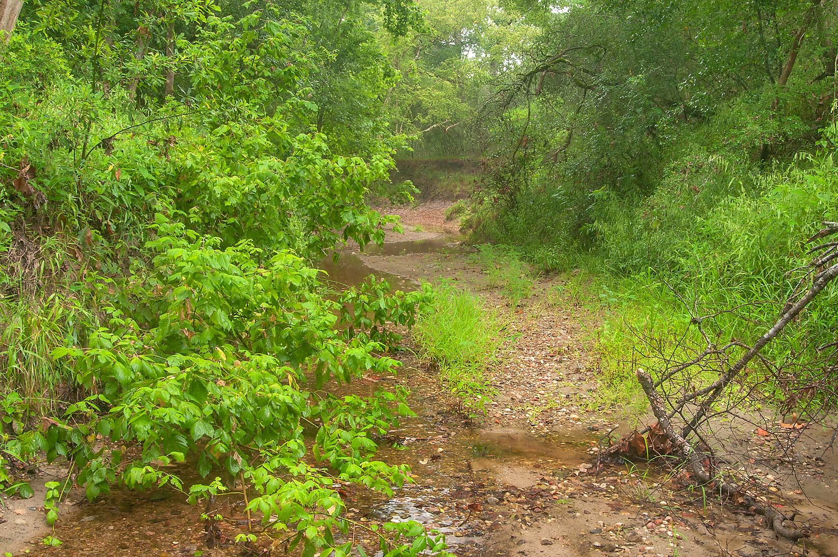 Bottom of Lick Creek near Iron Bridge Trail near...Creek Park. College Station, Texas