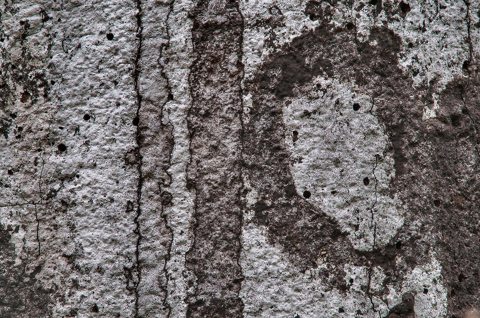 Texture of bark of dry oak tree on Racoon Run...Creek Park. College Station, Texas