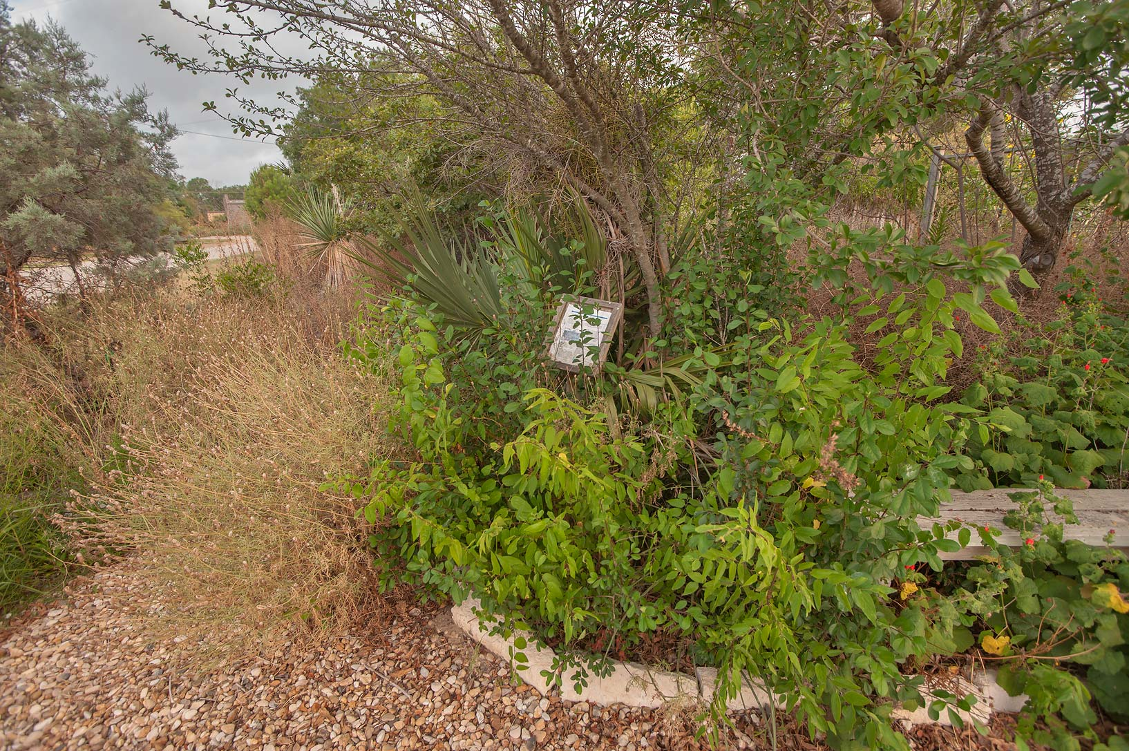Entrance of overgrown TAMU Horticultural Gardens...M University. College Station, Texas