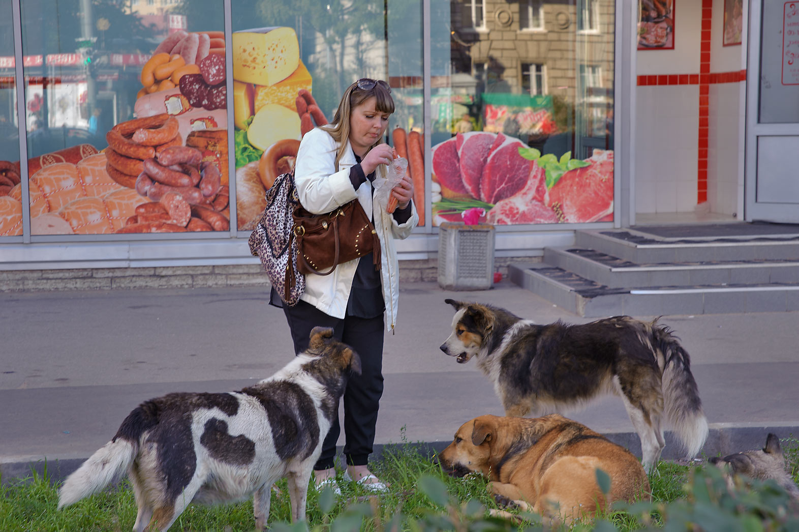 Feeding a pack of stray dogs by hot dogs near a...Square. St.Petersburg, Russia