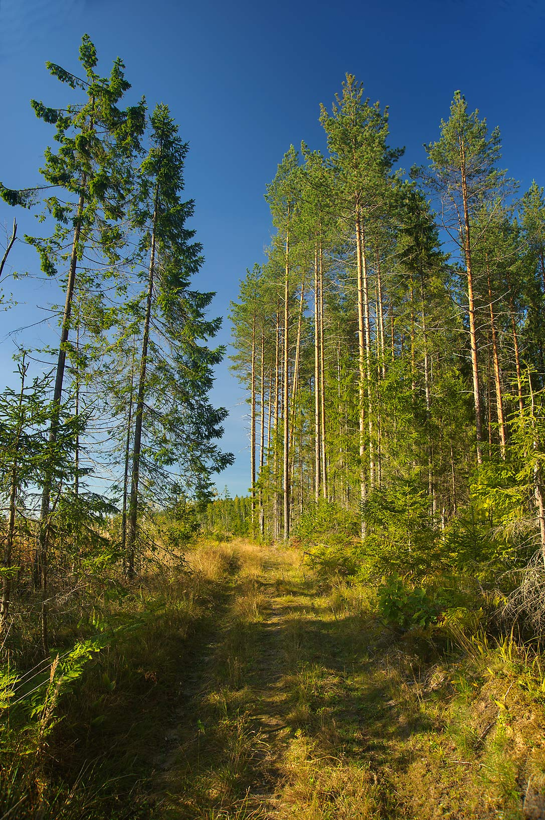 Forest road near Lembolovo, 45 miles north from St.Petersburg. Russia