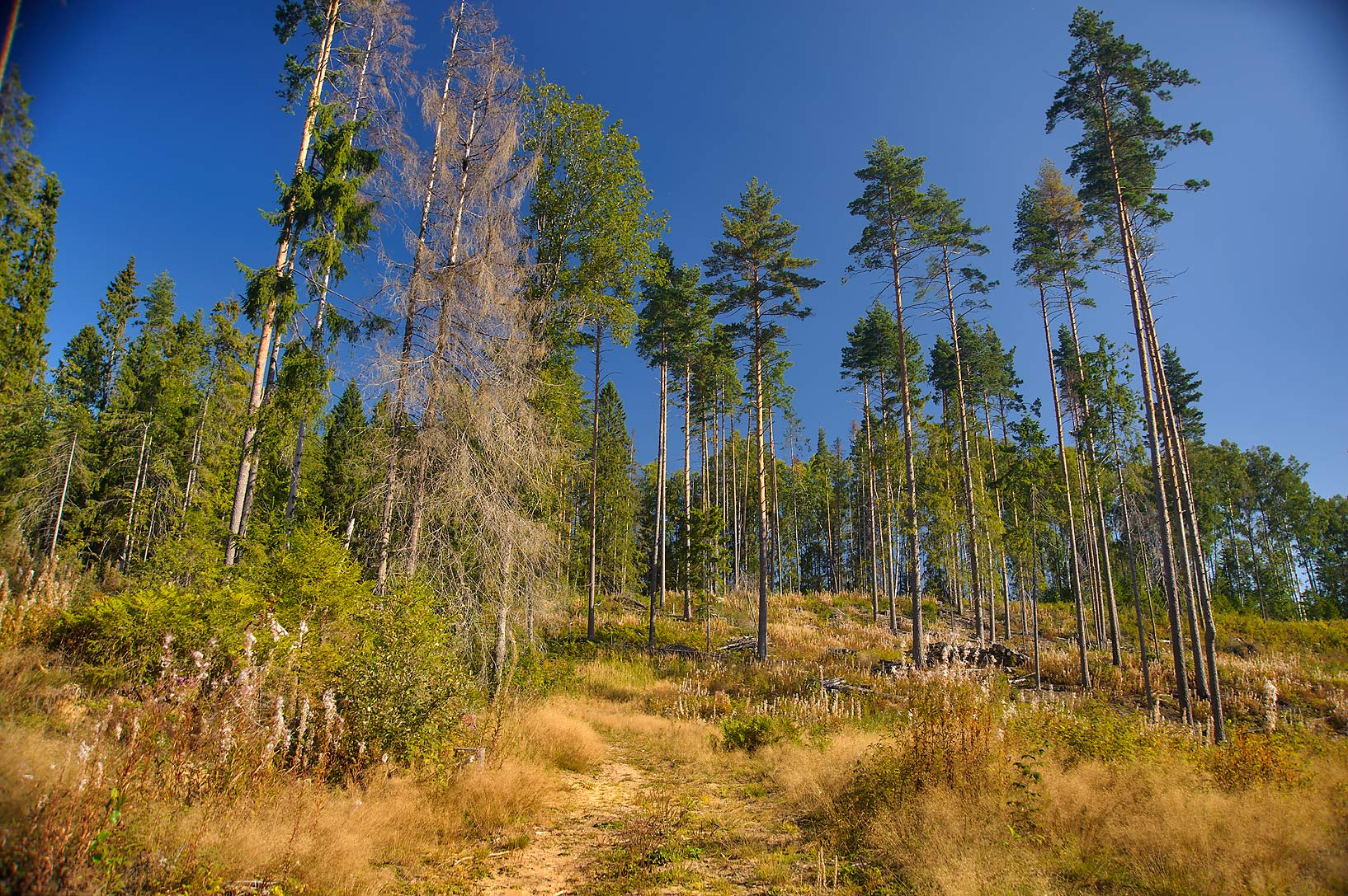Partially cut forest near Lembolovo, 45 miles north from St.Petersburg. Russia
