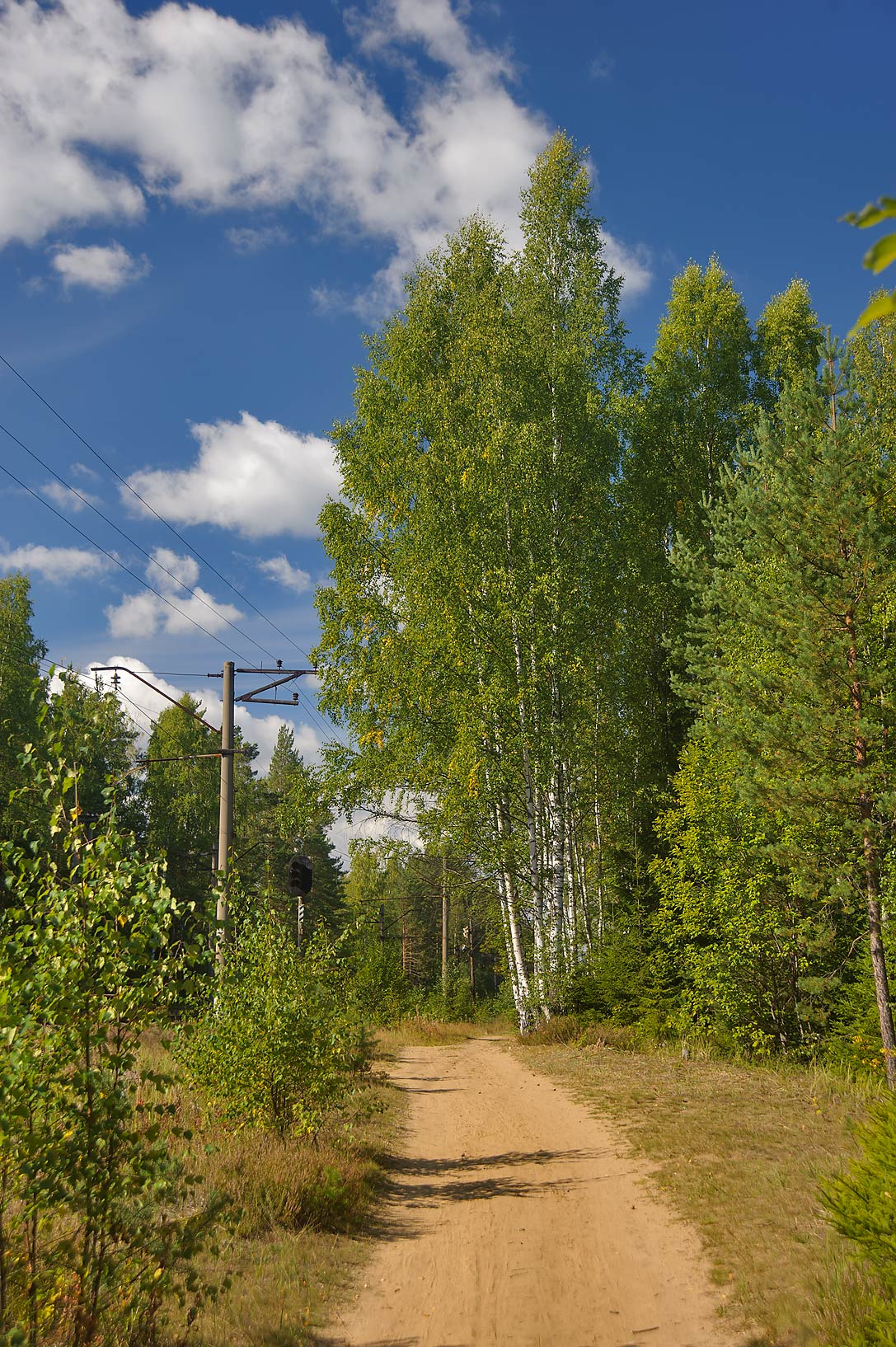 Forest road along railroad line south from...miles north from St.Petersburg. Russia