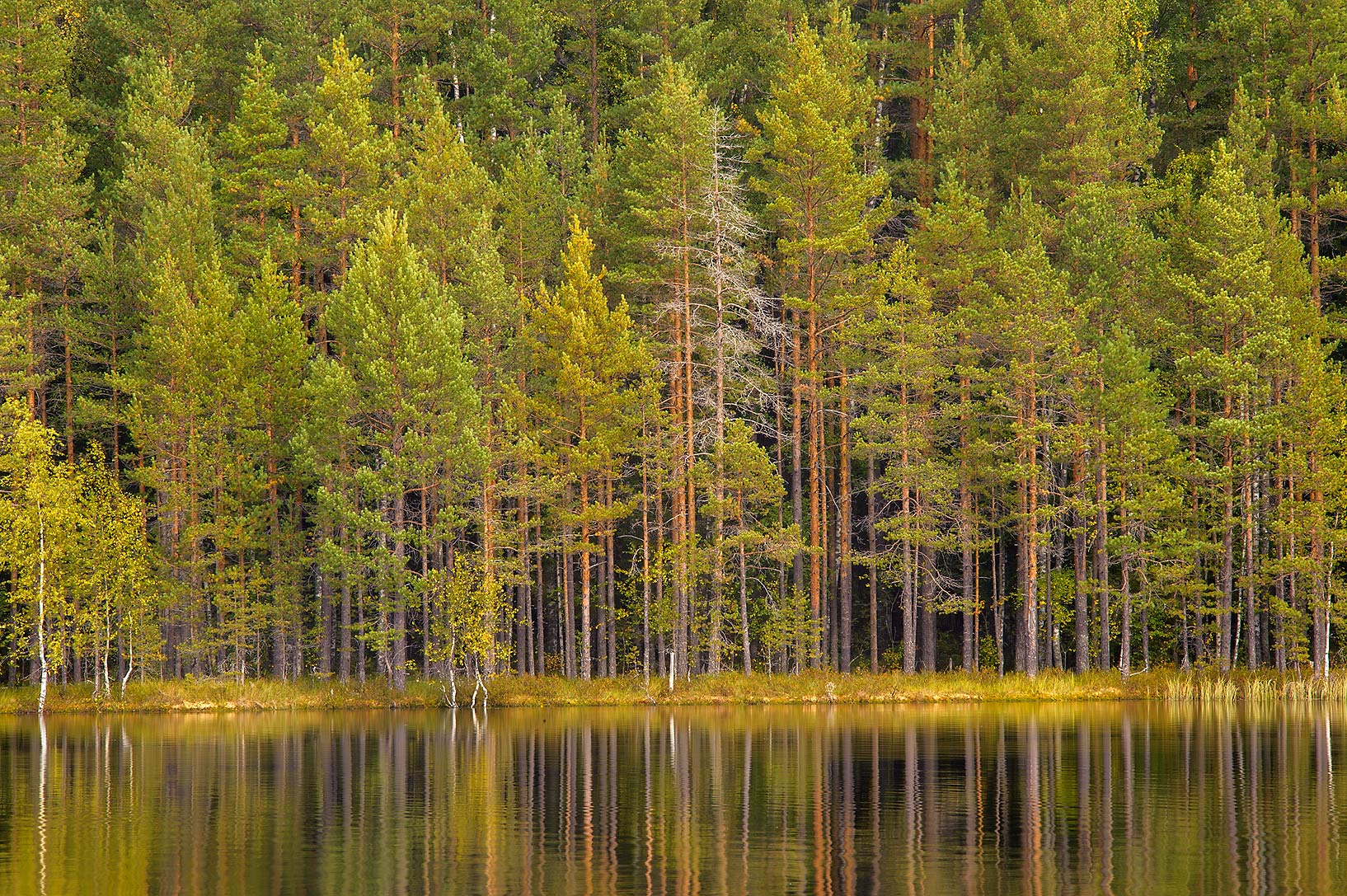 Lebyazhye Lake in Petiayarvi, 50 miles north from St.Petersburg. Russia