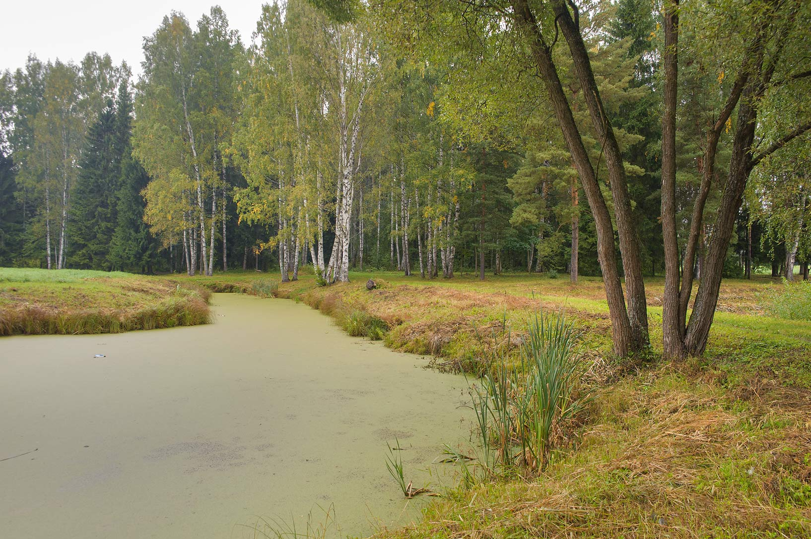 First Kruglozalny Pond in area of Bolshaya Zvezda...a suburb of St.Petersburg, Russia
