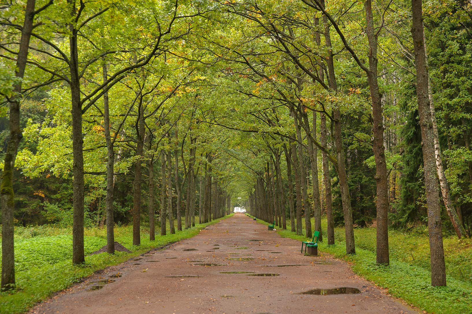 Green Woman Alley in Pavlovsk Park. Pavlovsk, a suburb of St.Petersburg, Russia