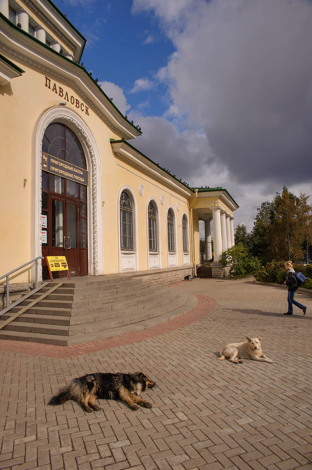Pack of stray dogs sleeping in front of Pavlovsk...a suburb of St.Petersburg, Russia