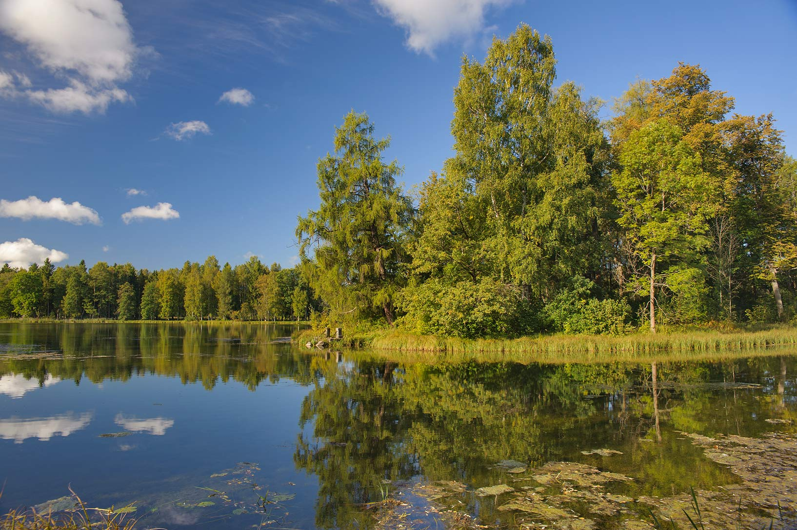 Fir Island in Beloe Lake in Gatchina Park. Gatchina, a suburb of St.Petersburg, Russia