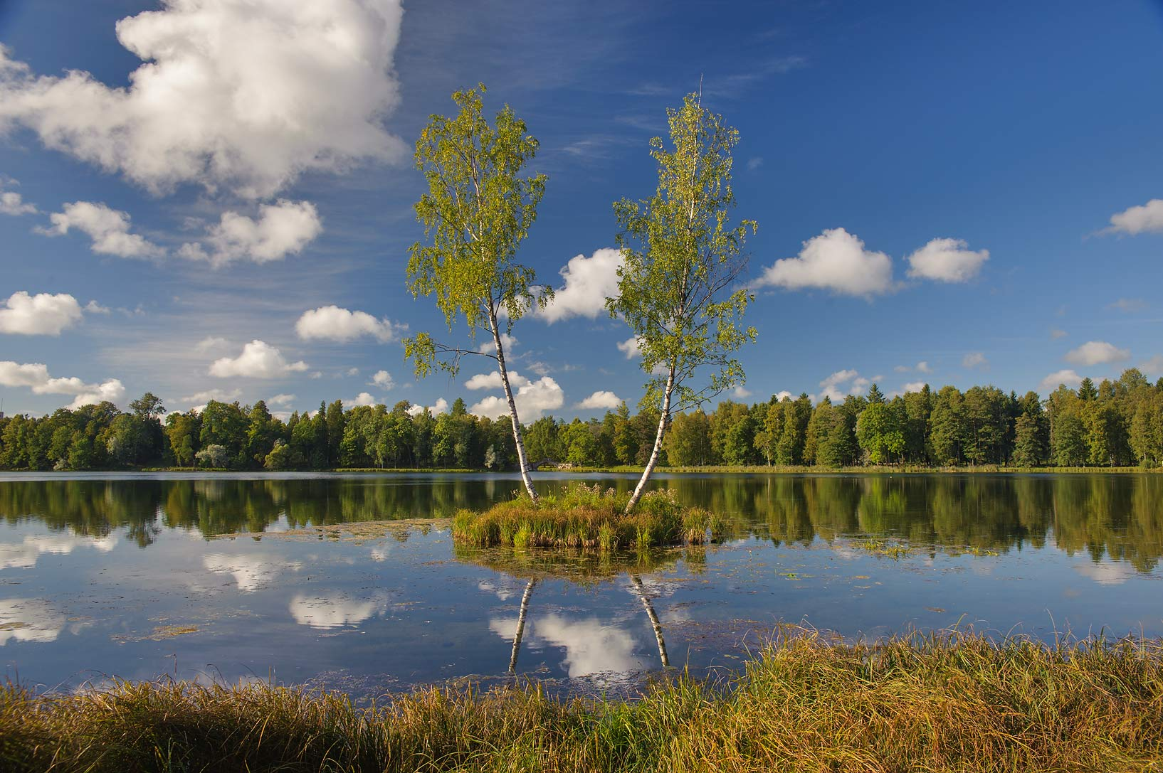Birch Island in Beloe Lake in Gatchina Park. Gatchina, a suburb of St.Petersburg, Russia