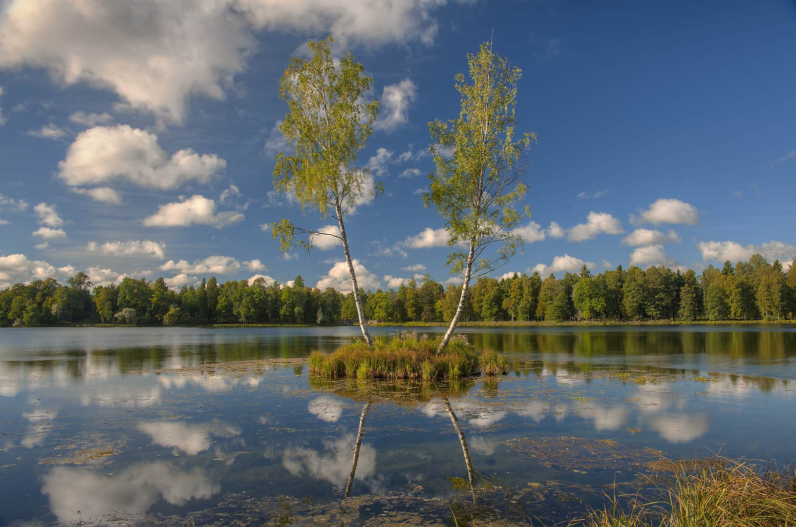 Two birches on a small island in Beloe Lake in...a suburb of St.Petersburg, Russia