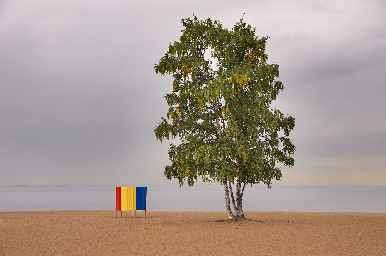 Birch tree on Laskovy Beach in Solnechnoe, west from St.Petersburg. Russia