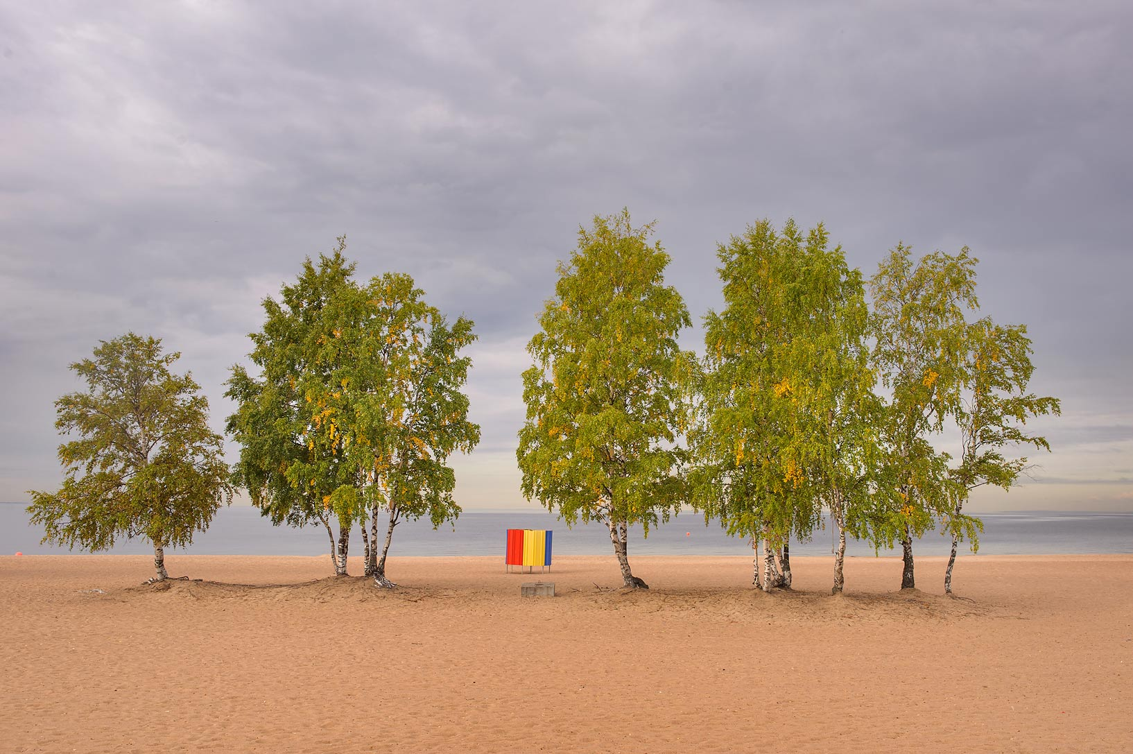 Group of birches on Laskovy Beach in Solnechnoe, west from St.Petersburg. Russia