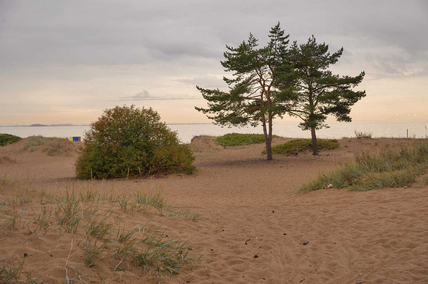 Dunes of Laskovy Beach in Solnechnoe, west from St.Petersburg. Russia