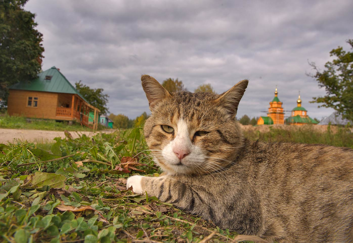 Monk's cat in Holy Annunciation Nikandrova Desert...Pustyn). Pskov Region, Russia