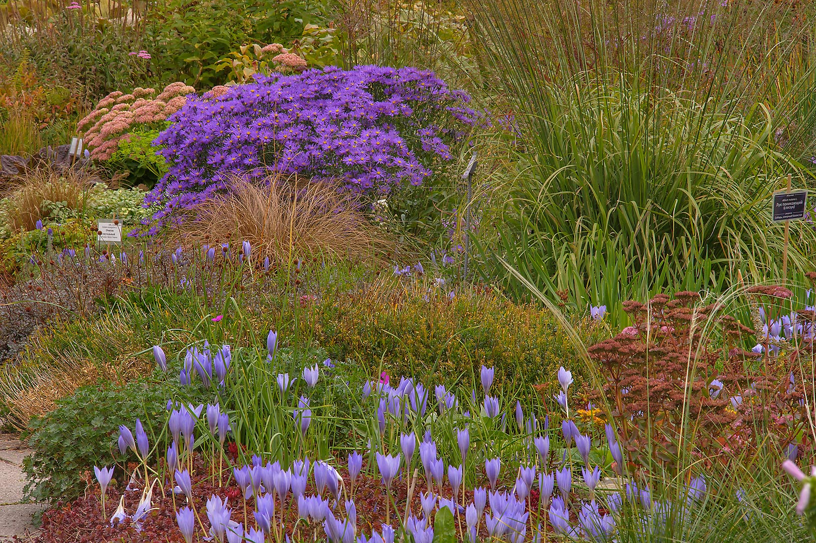 Flowerbeds in Botanic Gardens of Komarov Botanical Institute. St.Petersburg, Russia