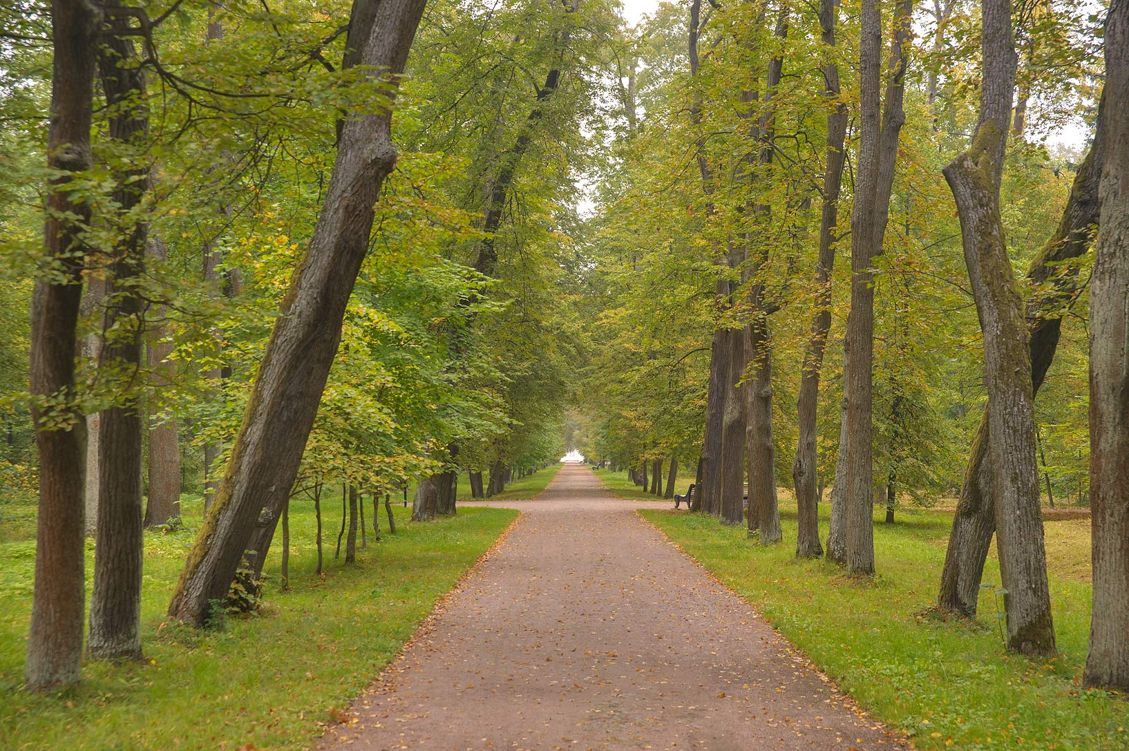 Linden alley in area of Chinese Palace in...West from St.Petersburg, Russia