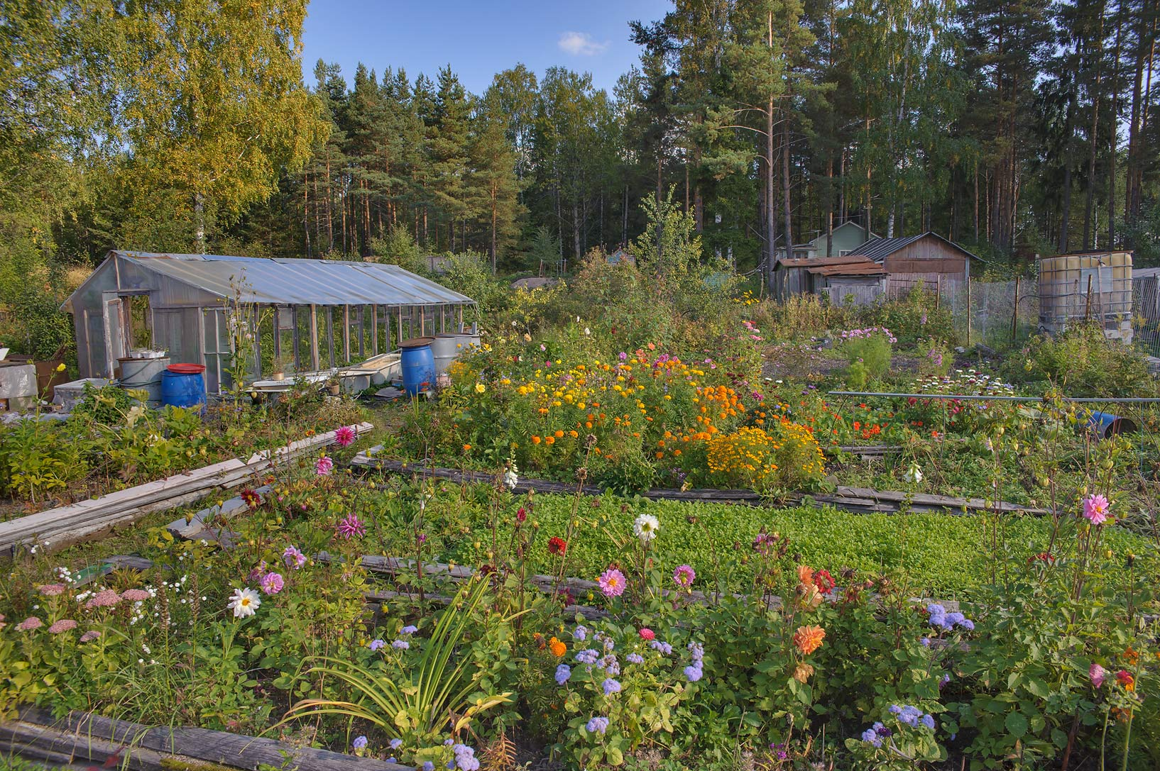 Vegetable gardens in north-west area of Monrepo (Mon Repos) Park. Vyborg, Russia
