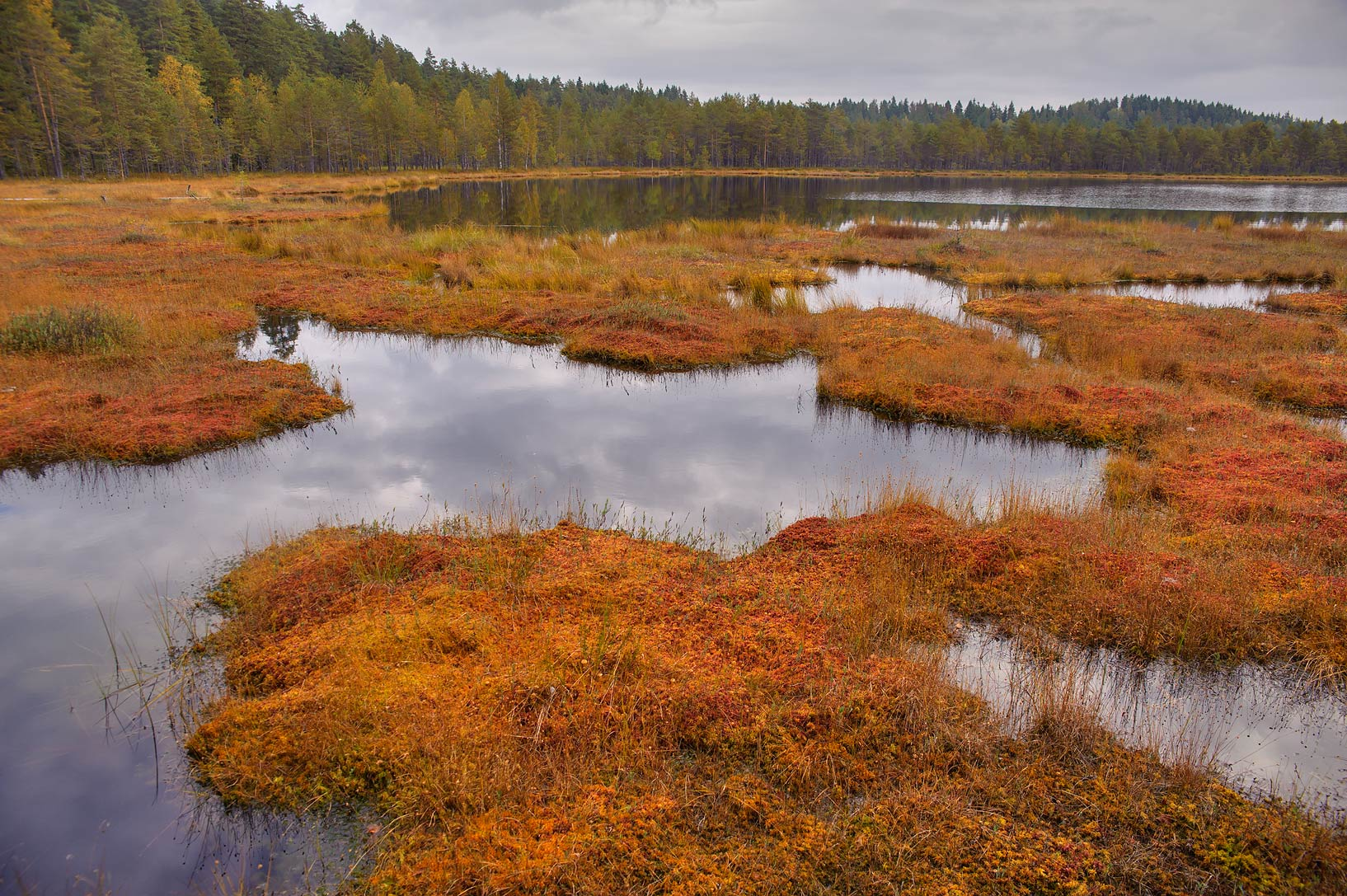 Floating islands on Dve Sestry Lake in Boloto...swamp reserve. St.Petersburg, Russia