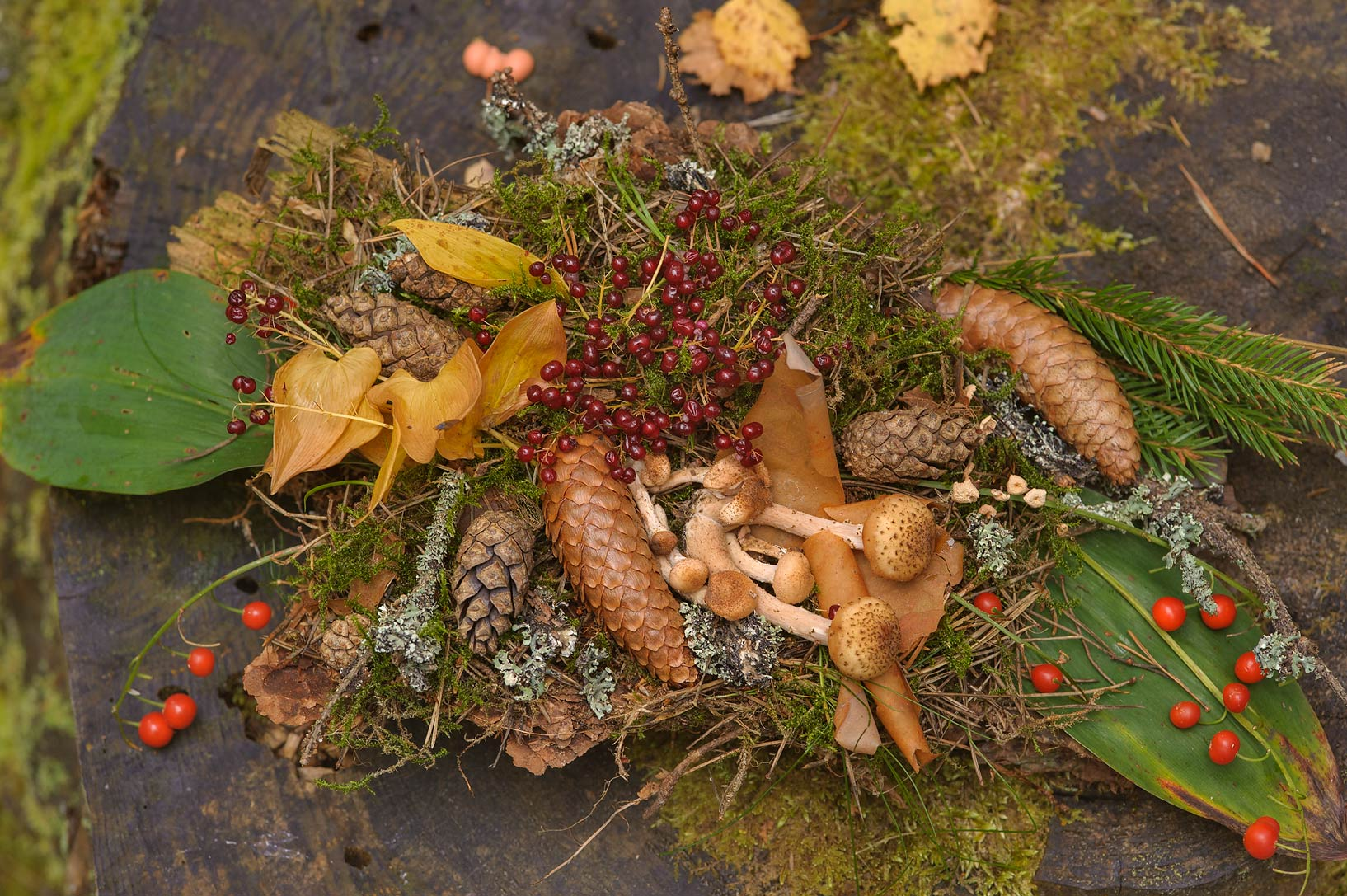 Fall bouquet composition on a tree stump near...miles west from St.Petersburg. Russia