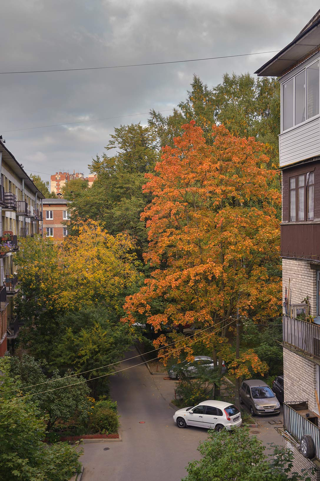 Fall colors of a maple tree, view from a window. St.Petersburg, Russia