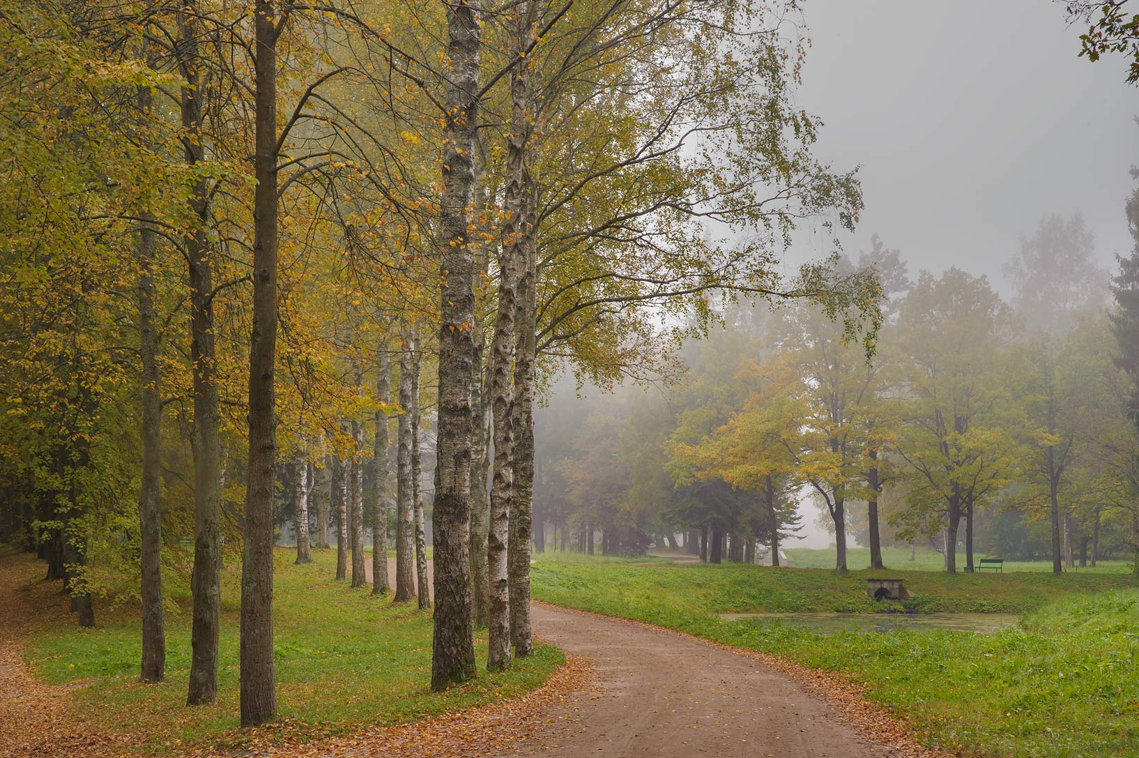 Krasnodolinnaya Alley in fog in Pavlovsk Park in...a suburb of St.Petersburg. Russia