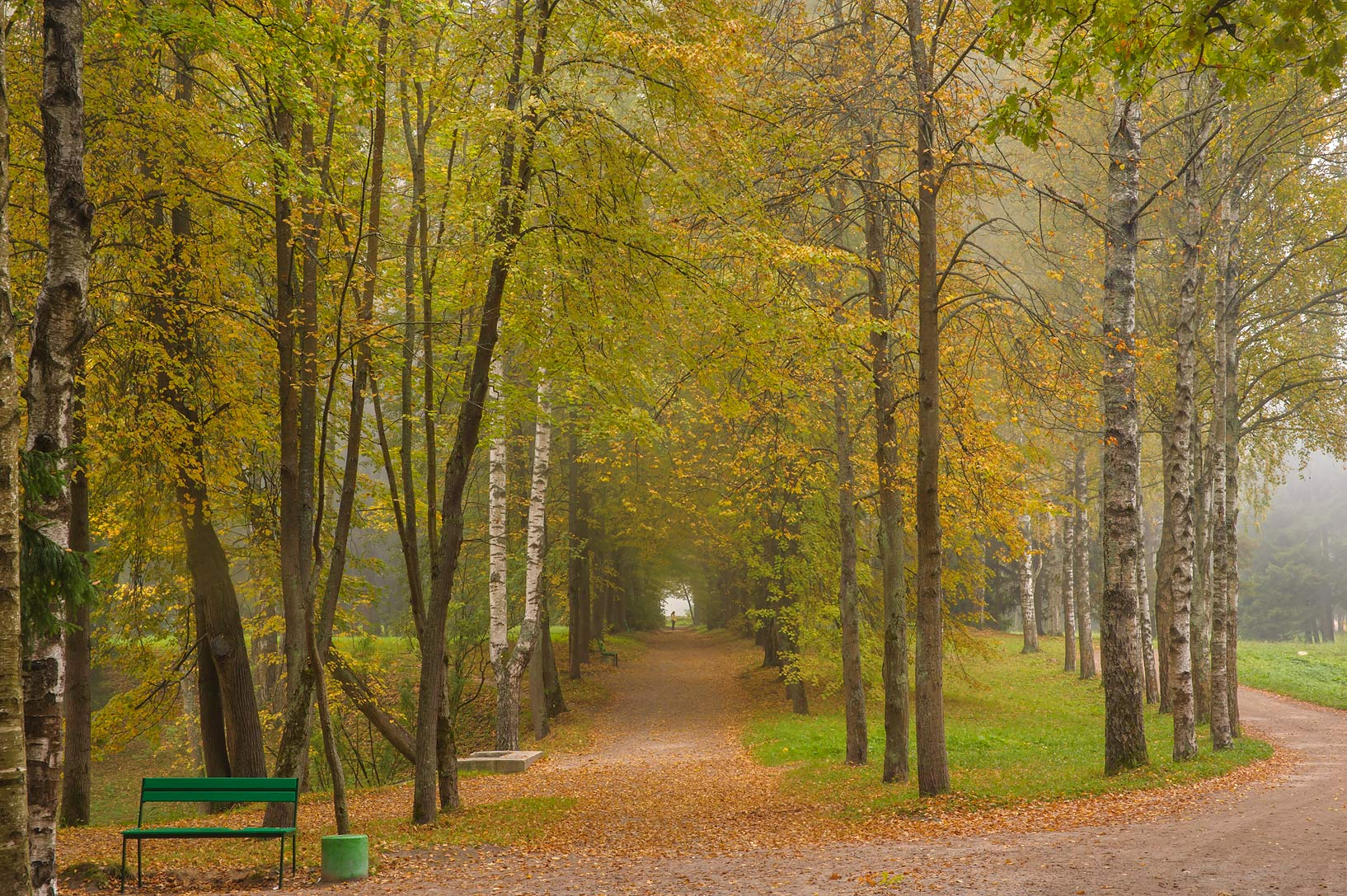 Fall colors of Krasnodolinnaya Alley in fog in...a suburb of St.Petersburg. Russia
