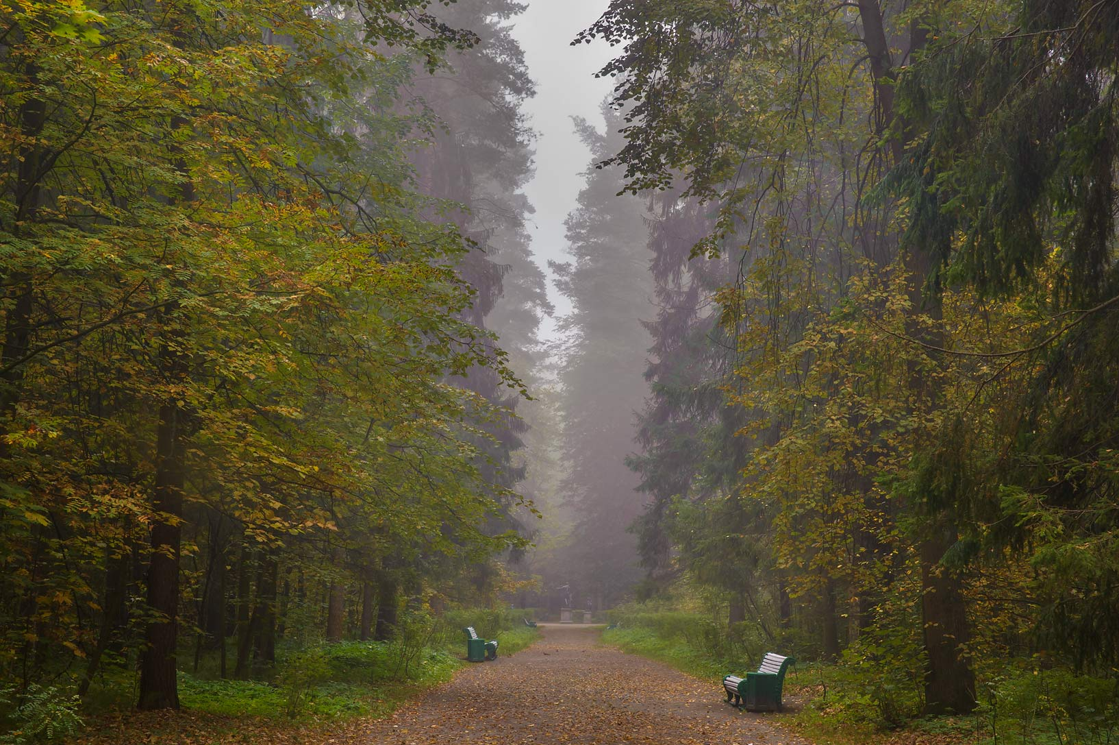 Starosilviyskaya Alley in fog in Pavlovsk Park in...a suburb of St.Petersburg. Russia