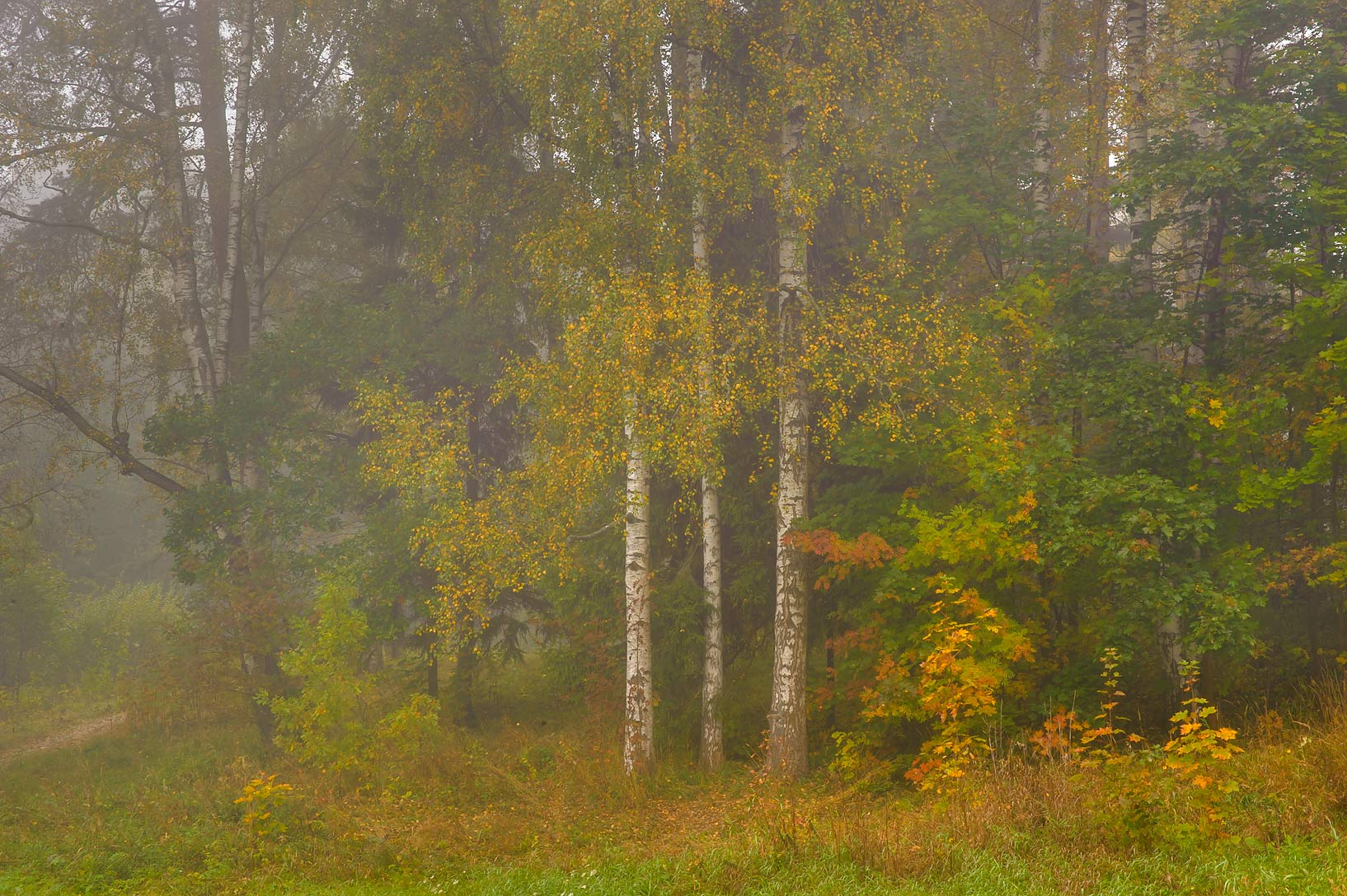 Fall colors valley of Slavianka River in Pavlovsk...a suburb of St.Petersburg, Russia