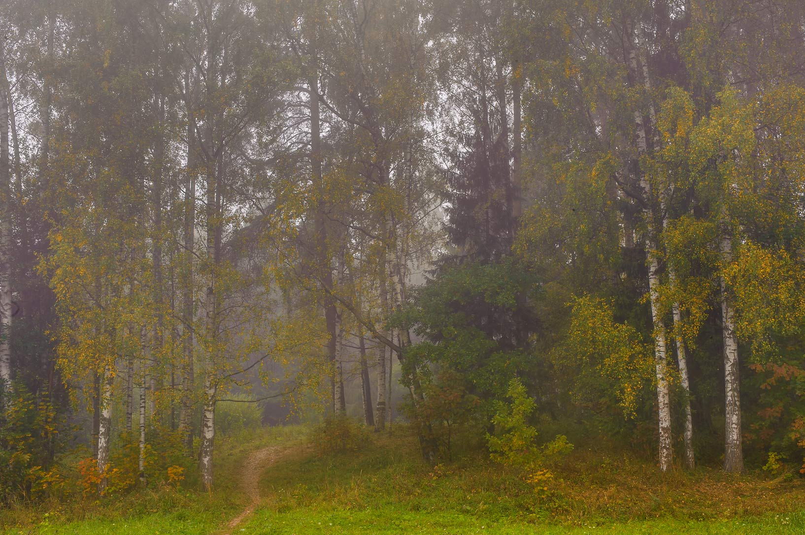 Trees in fog at valley of Slavianka River in...a suburb of St.Petersburg, Russia