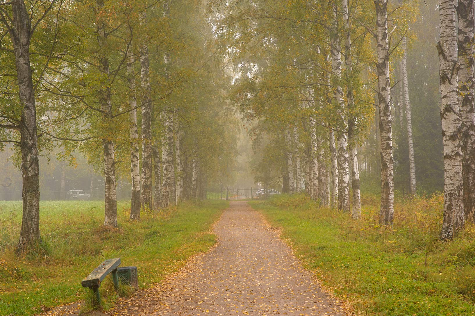 Bench at Krasnogo Bugra (Solntsa) Alley in fog in...a suburb of St.Petersburg, Russia