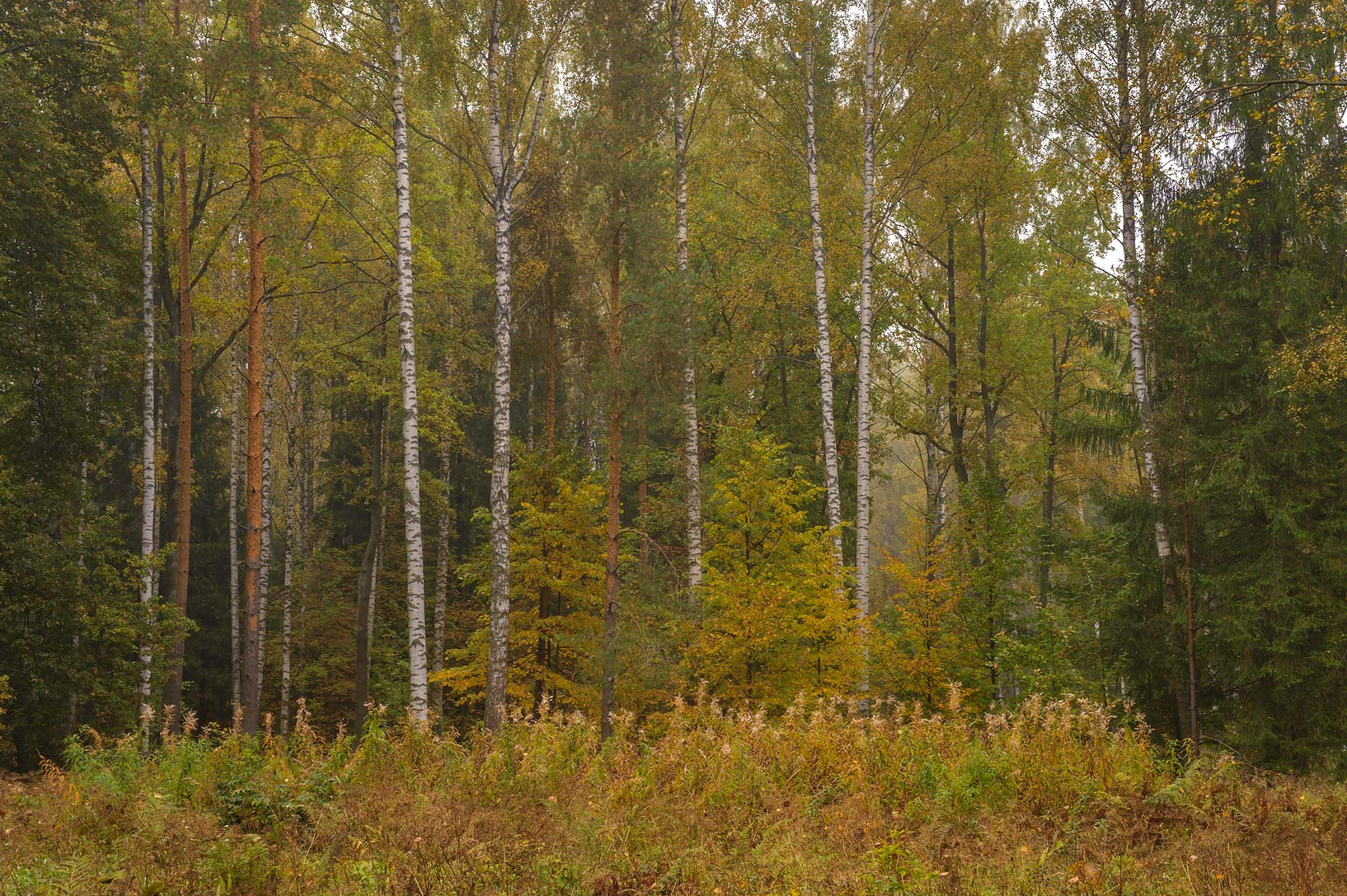 Forest near Staroshaleynaya Alley in Pavlovsk...a suburb of St.Petersburg, Russia